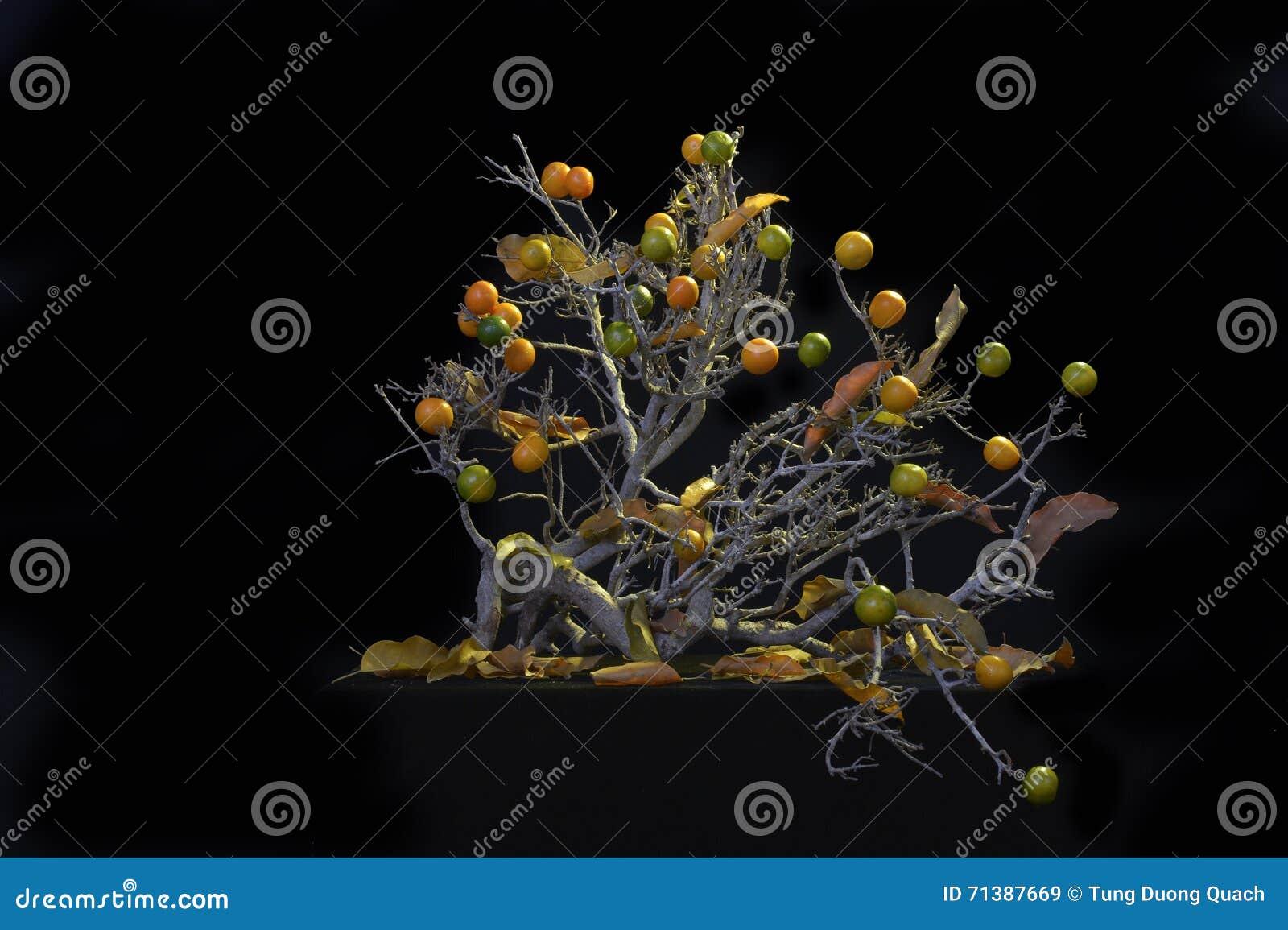 WYSUSZONY drzewo Z owoc