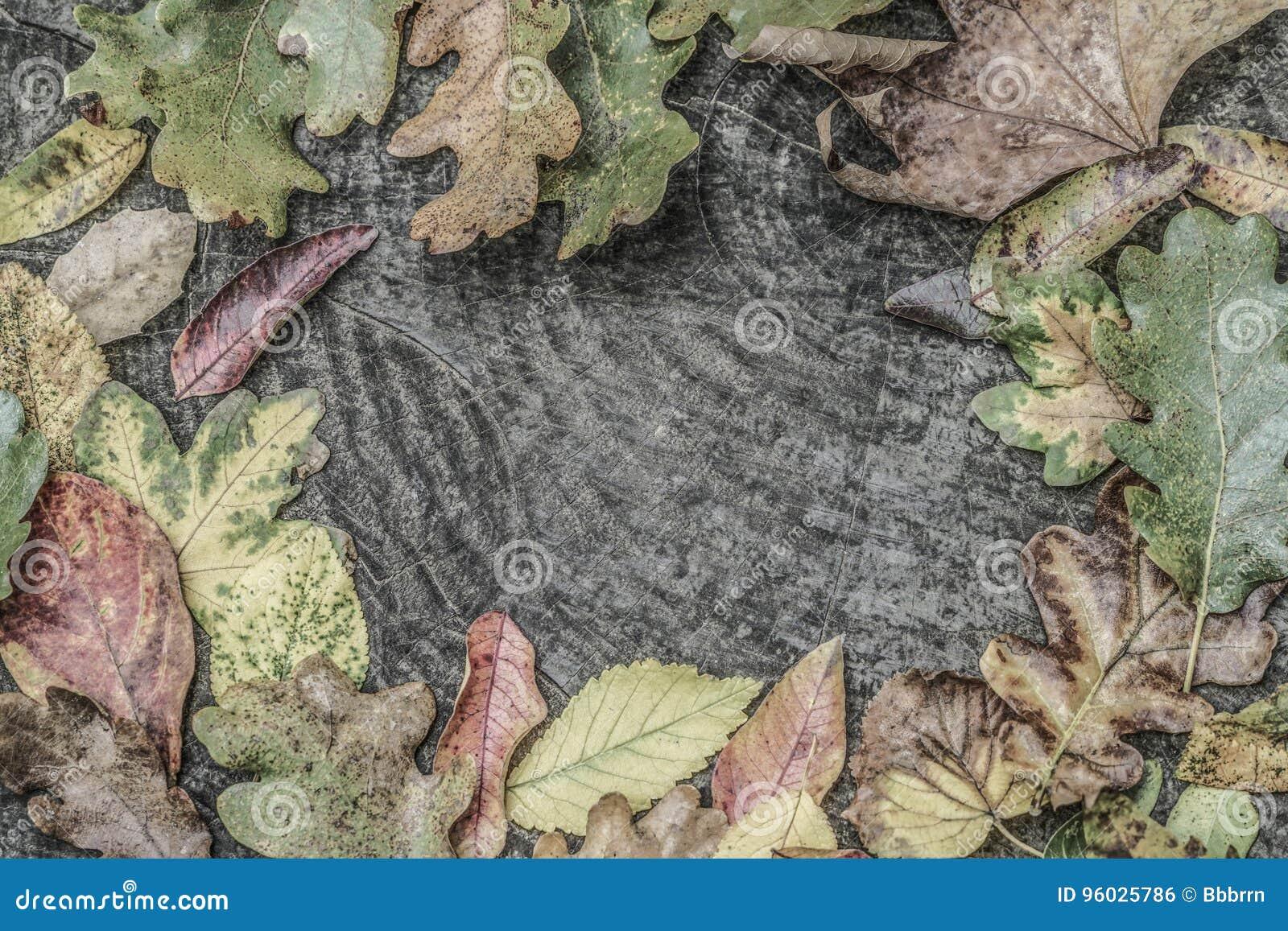 Wysuszony jesień liść na drewnianym tle