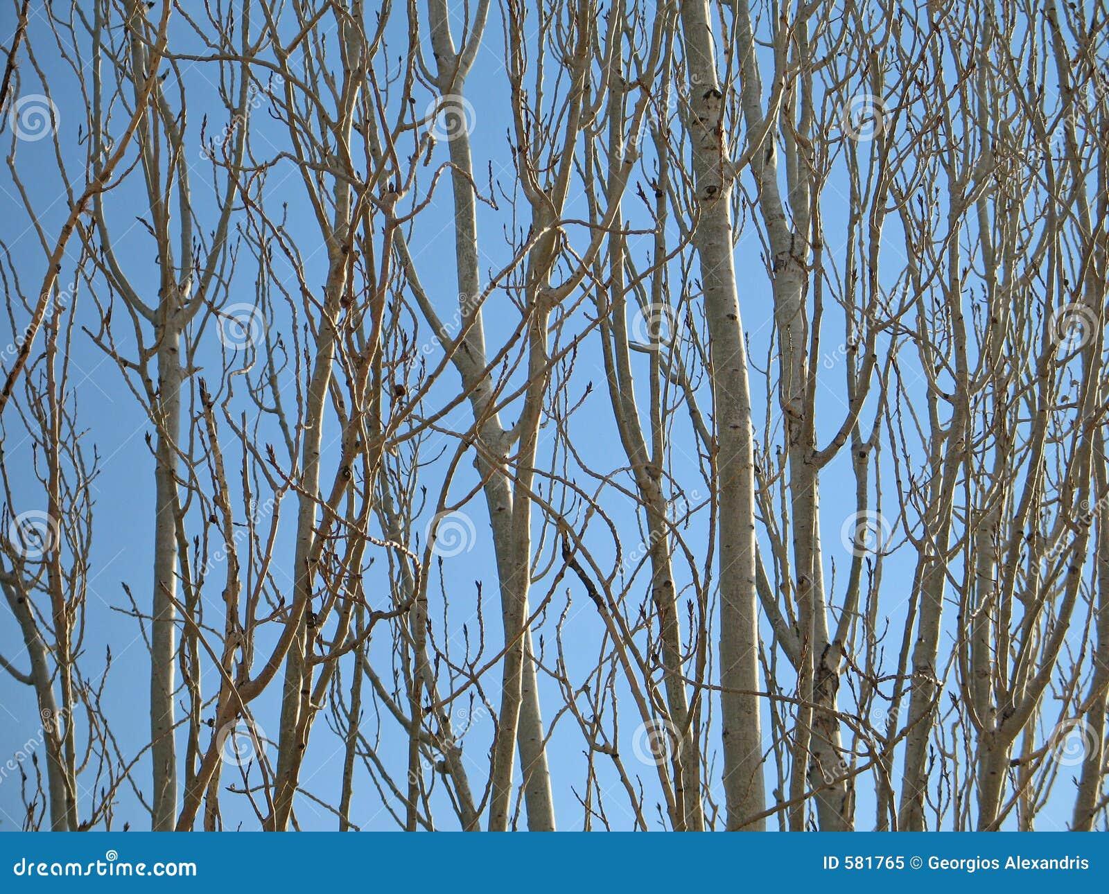 Wzór gałęzi drzewa