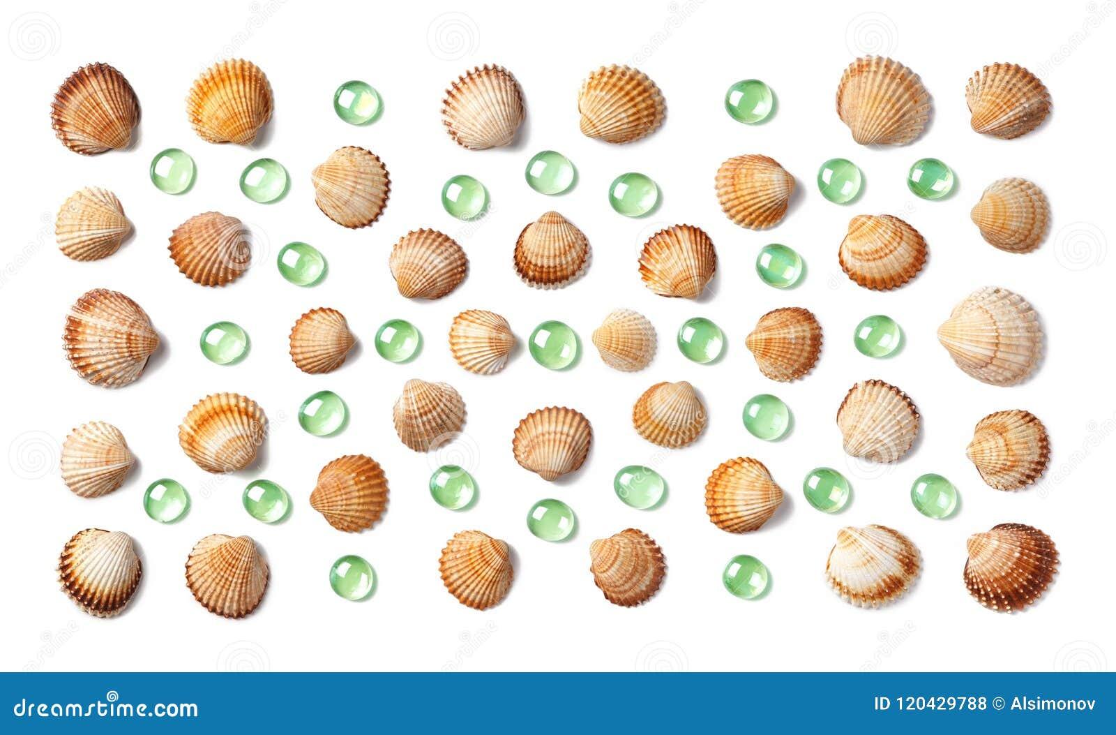 Wzór robić skorupy i zielonego szkła otoczaki odizolowywający na białym tle