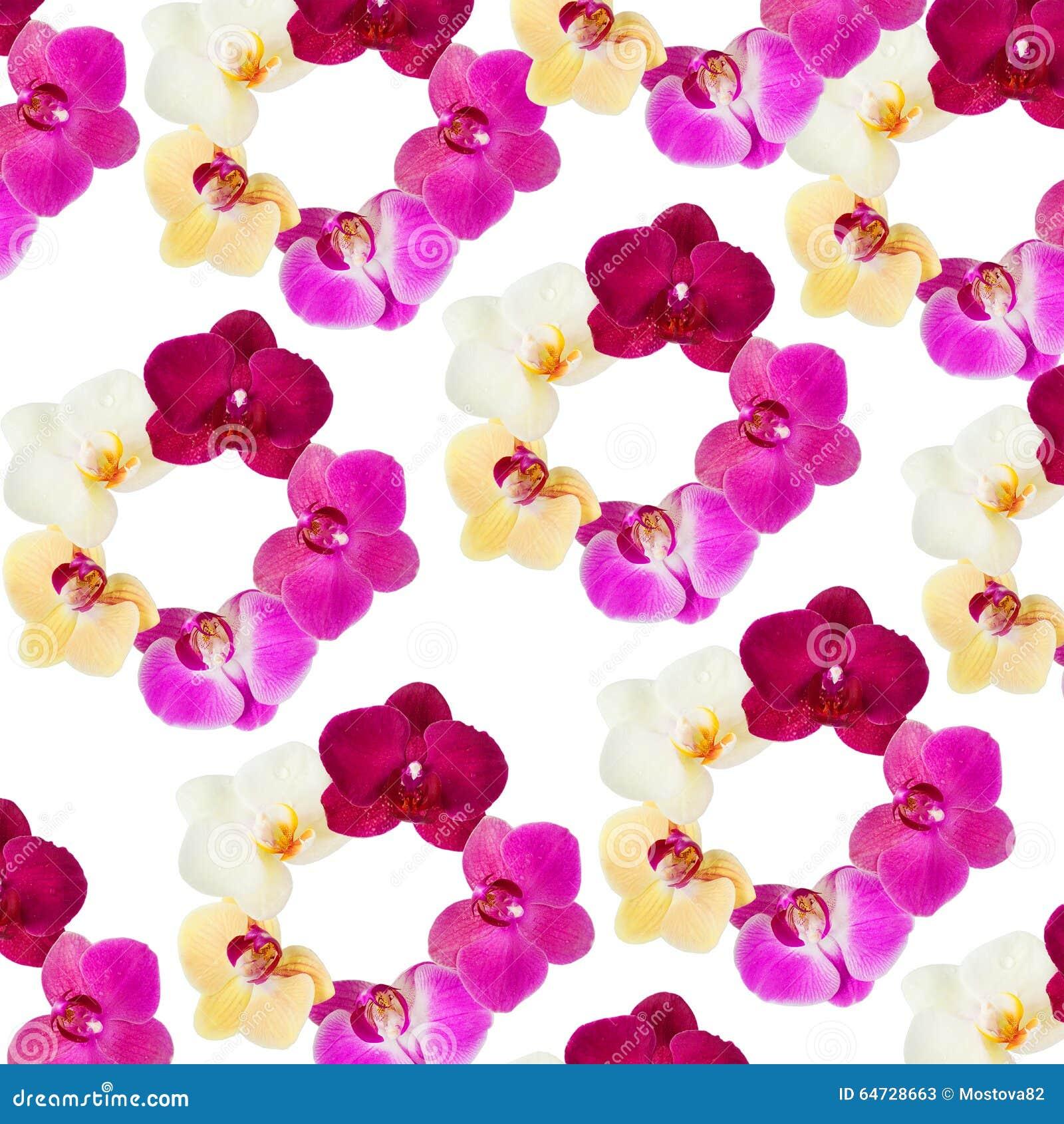 Wzór z orchideami kwitnie na białym tle
