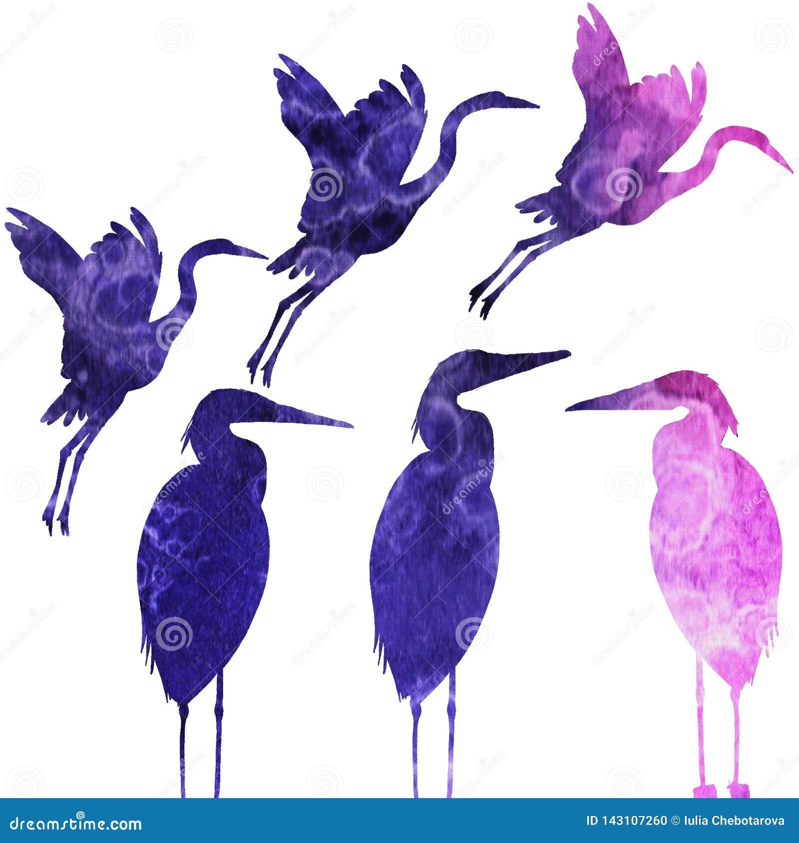 Wzór z ptakami akwarela