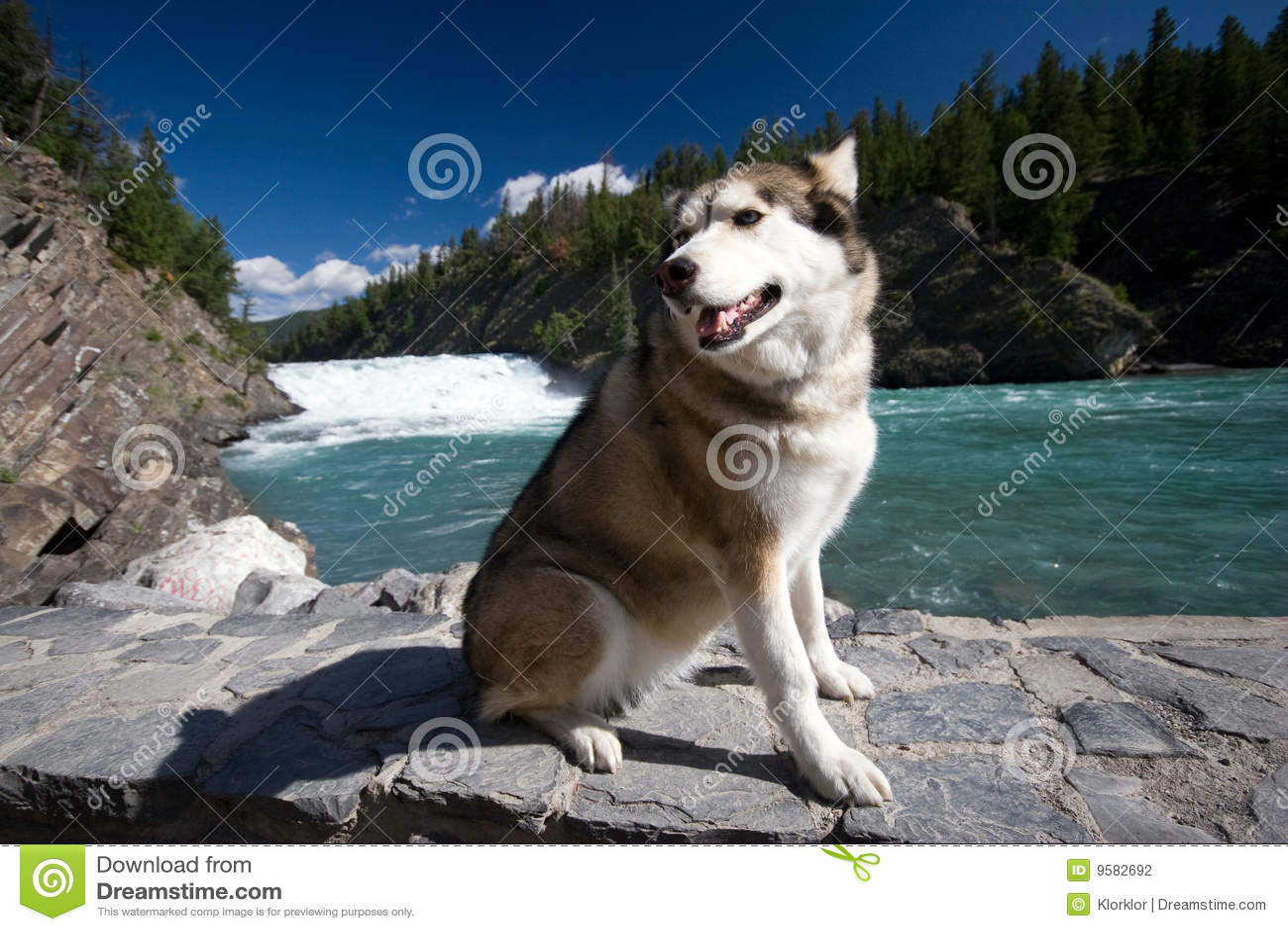 Wzdłuż łęku psa łuskowatego rzecznego spaceru