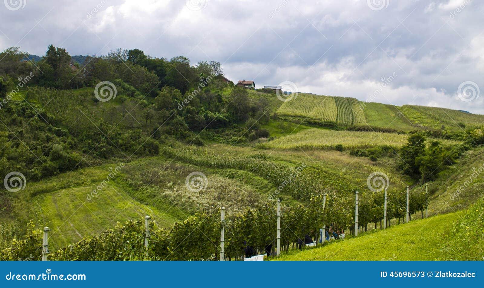 Wzgórza i łąki