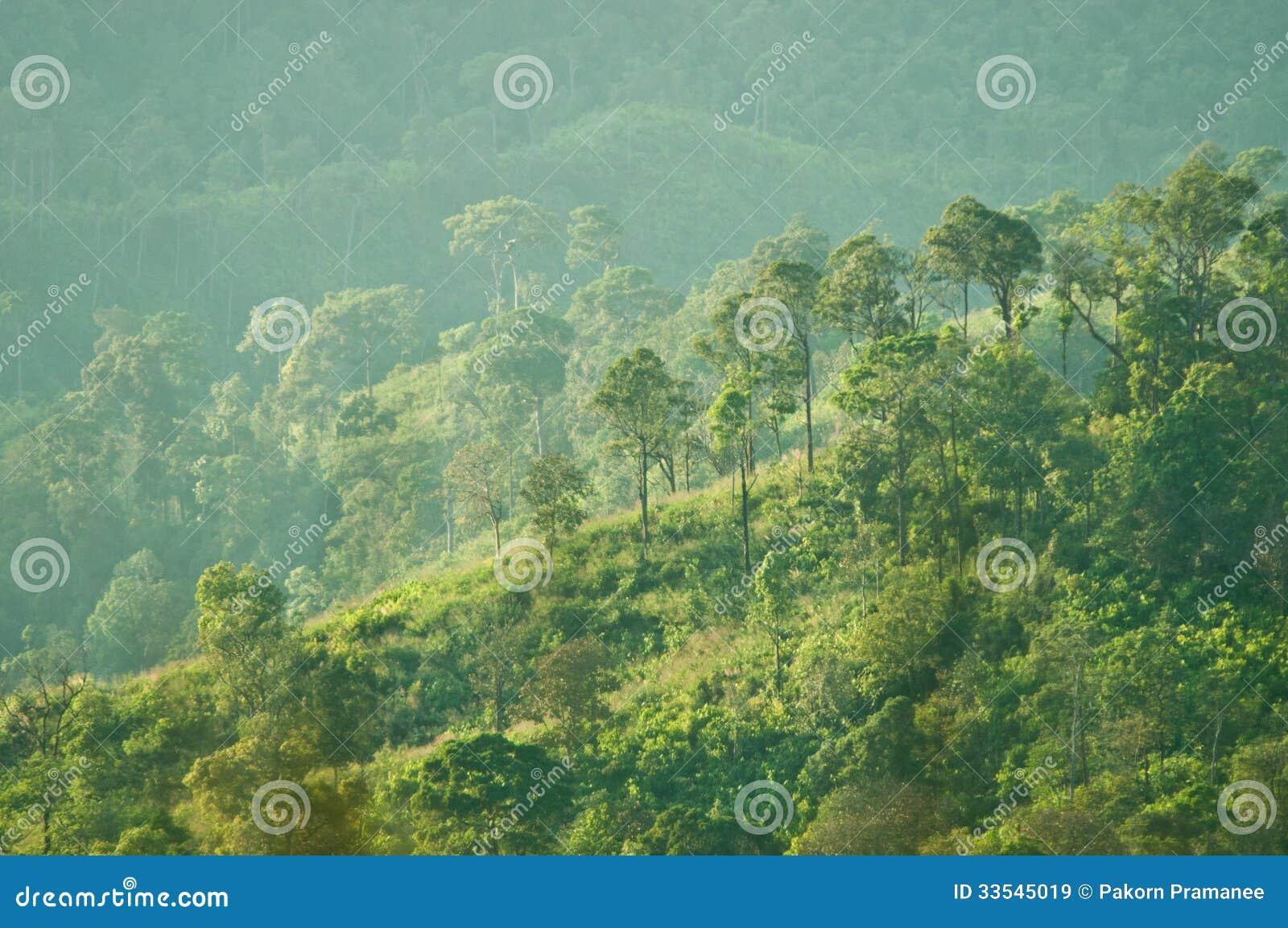 Wzgórza z lasem