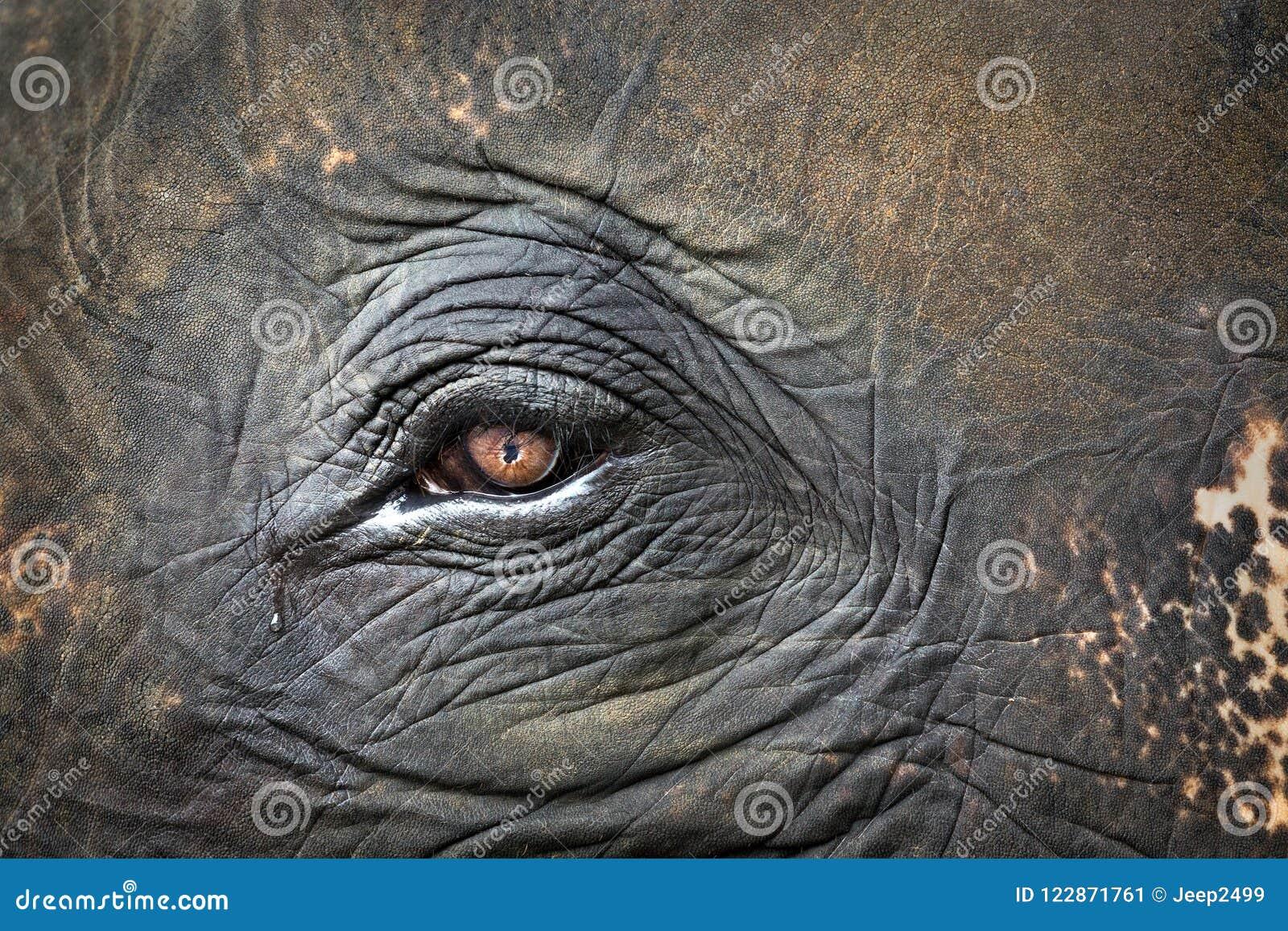 Wzory, oczy i skóra słonie,
