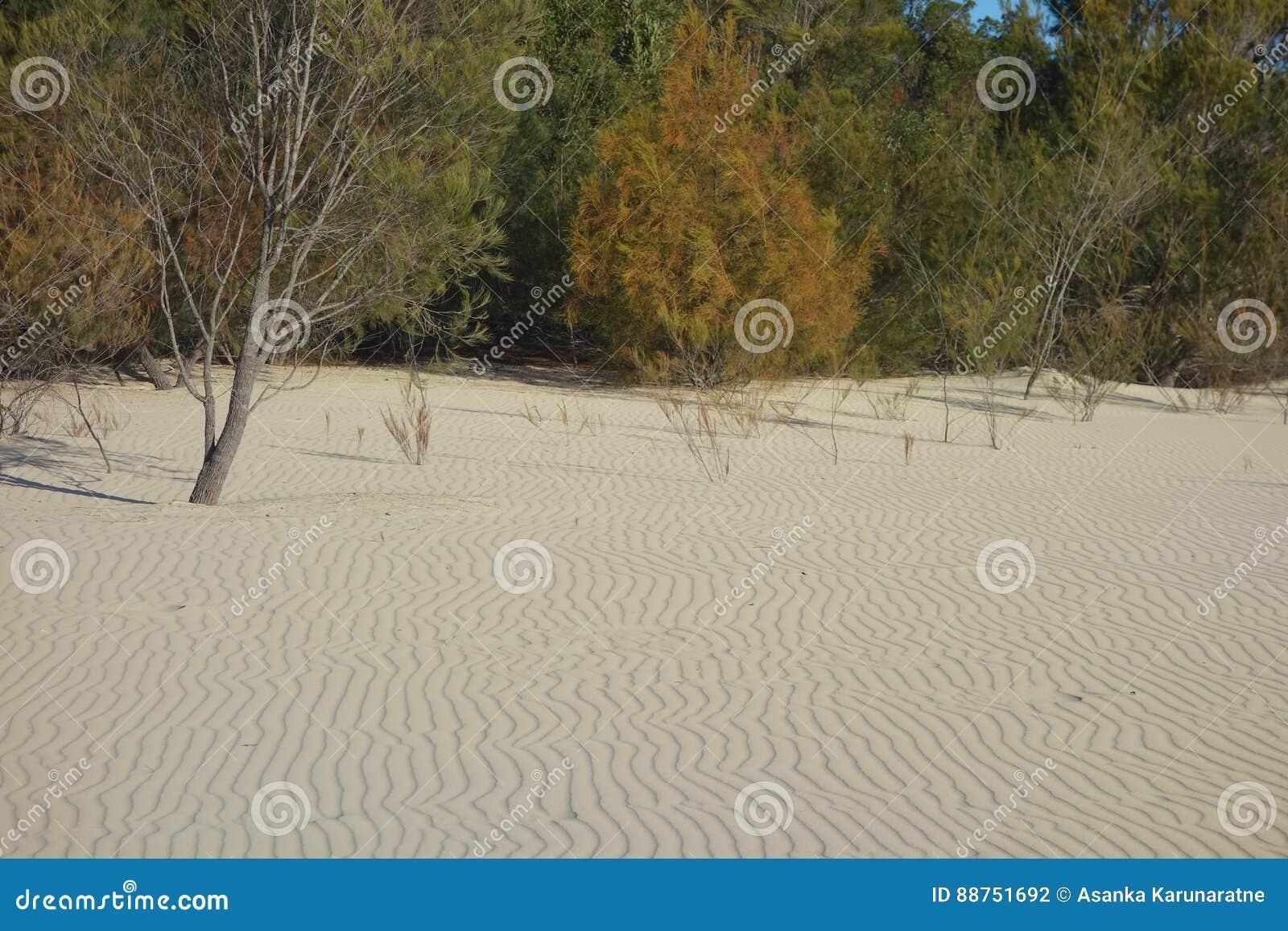 Wzory w piasku