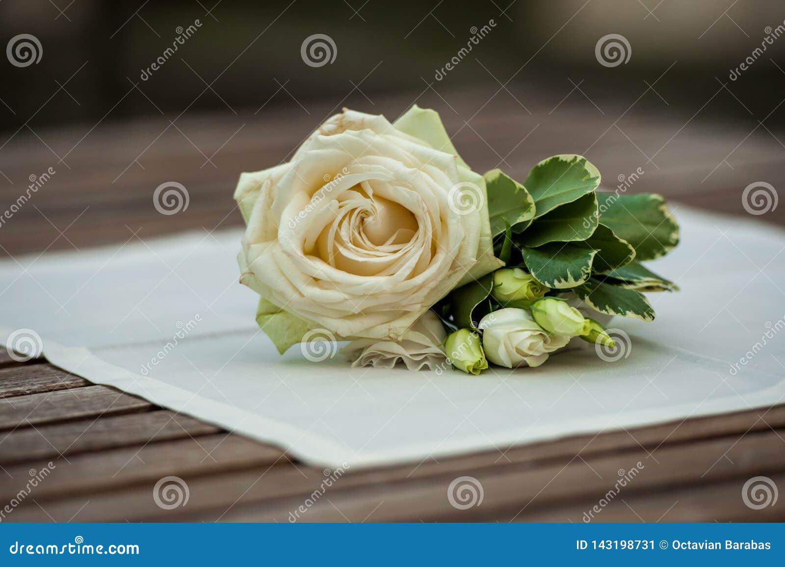 Wzrastał i zieleń liście na białej pielusze na drewno stole