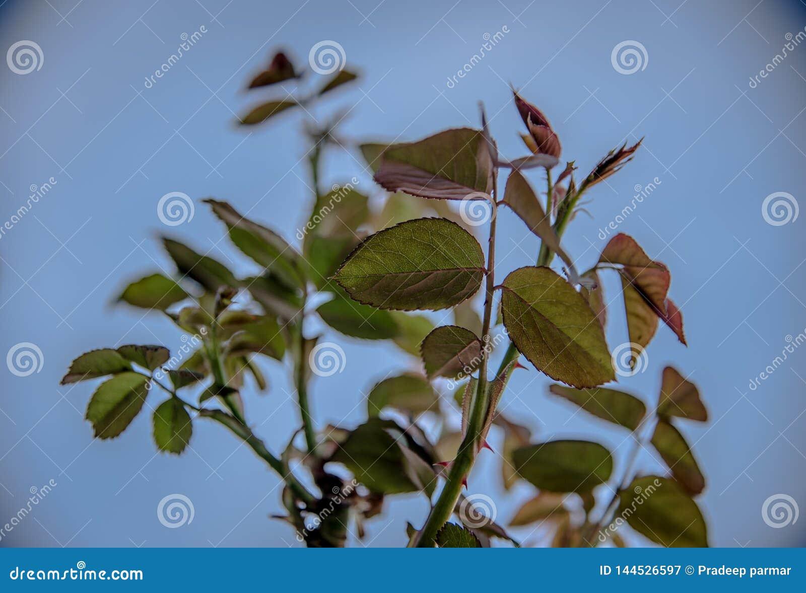 Wzrastał rośliny która jest w pełnym kwiacie ten sezonem rok Zobaczył ten rośliny na śladzie