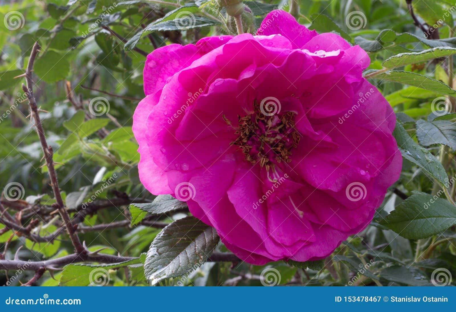 Wzrasta? kwiatu