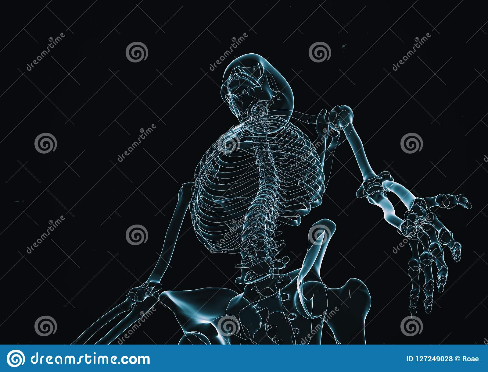 X-射线骨骼3d回报与拷贝空间
