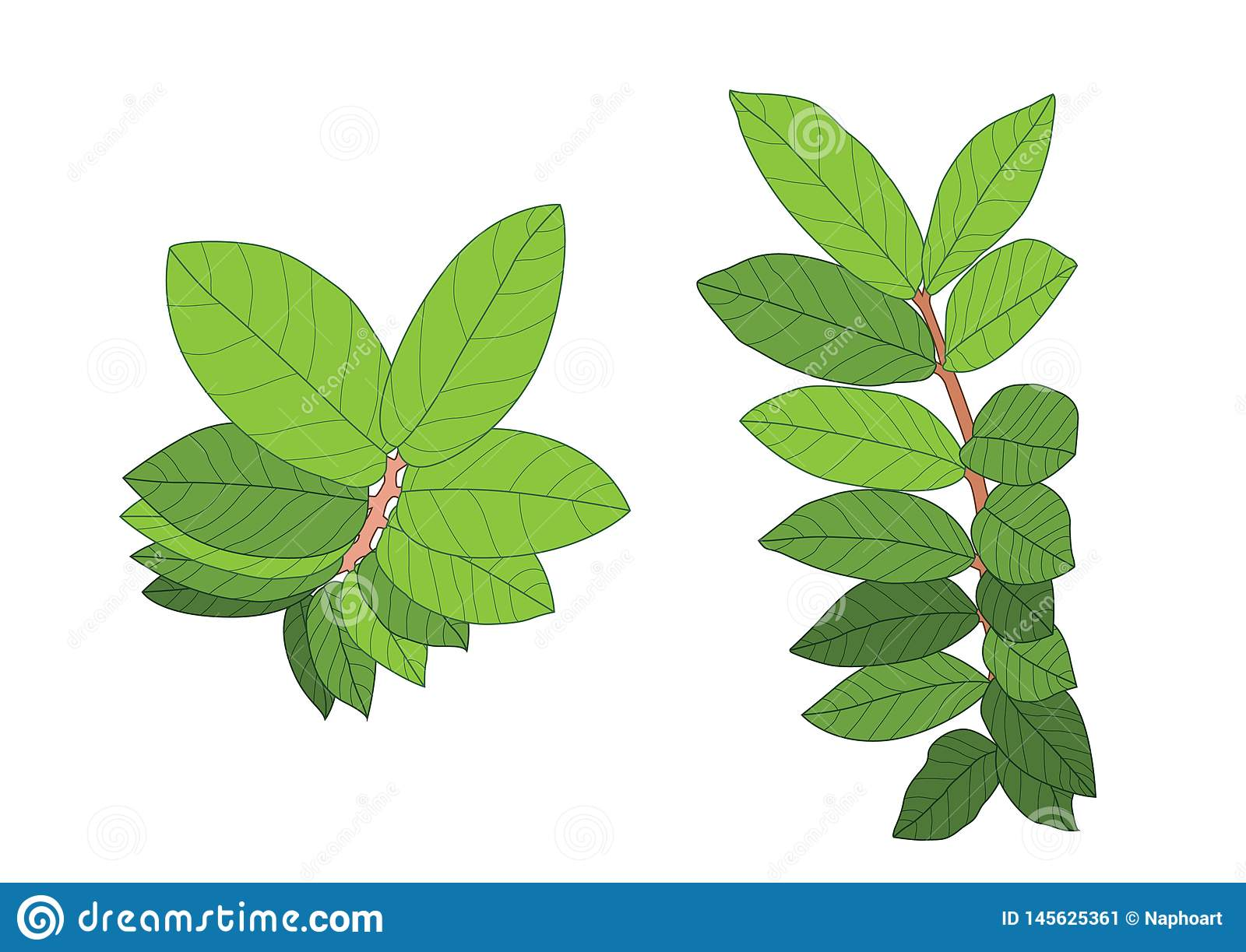 Green leaves are a bouquet on white background