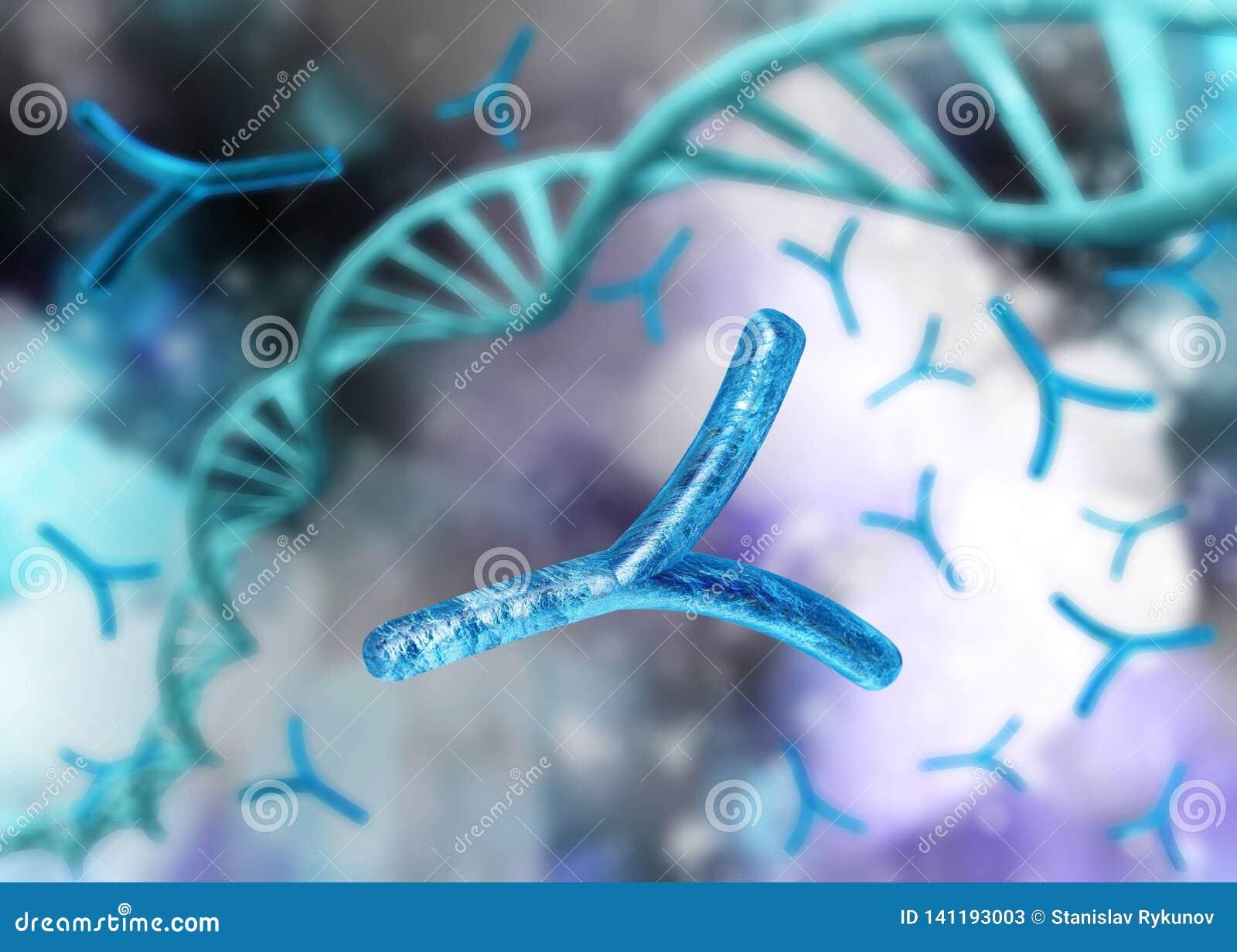 X-Chromosom und DNA