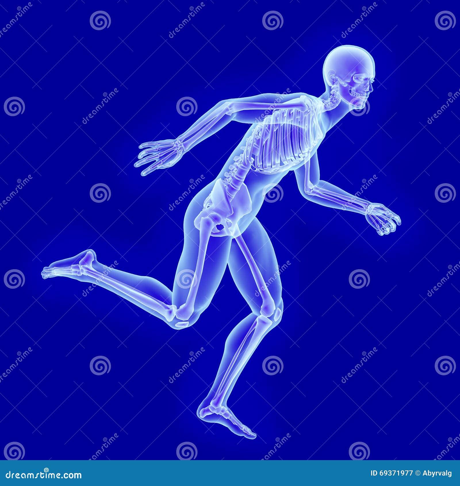 X-ray Anatomy Of Running Man Stock Illustration - Illustration of ...