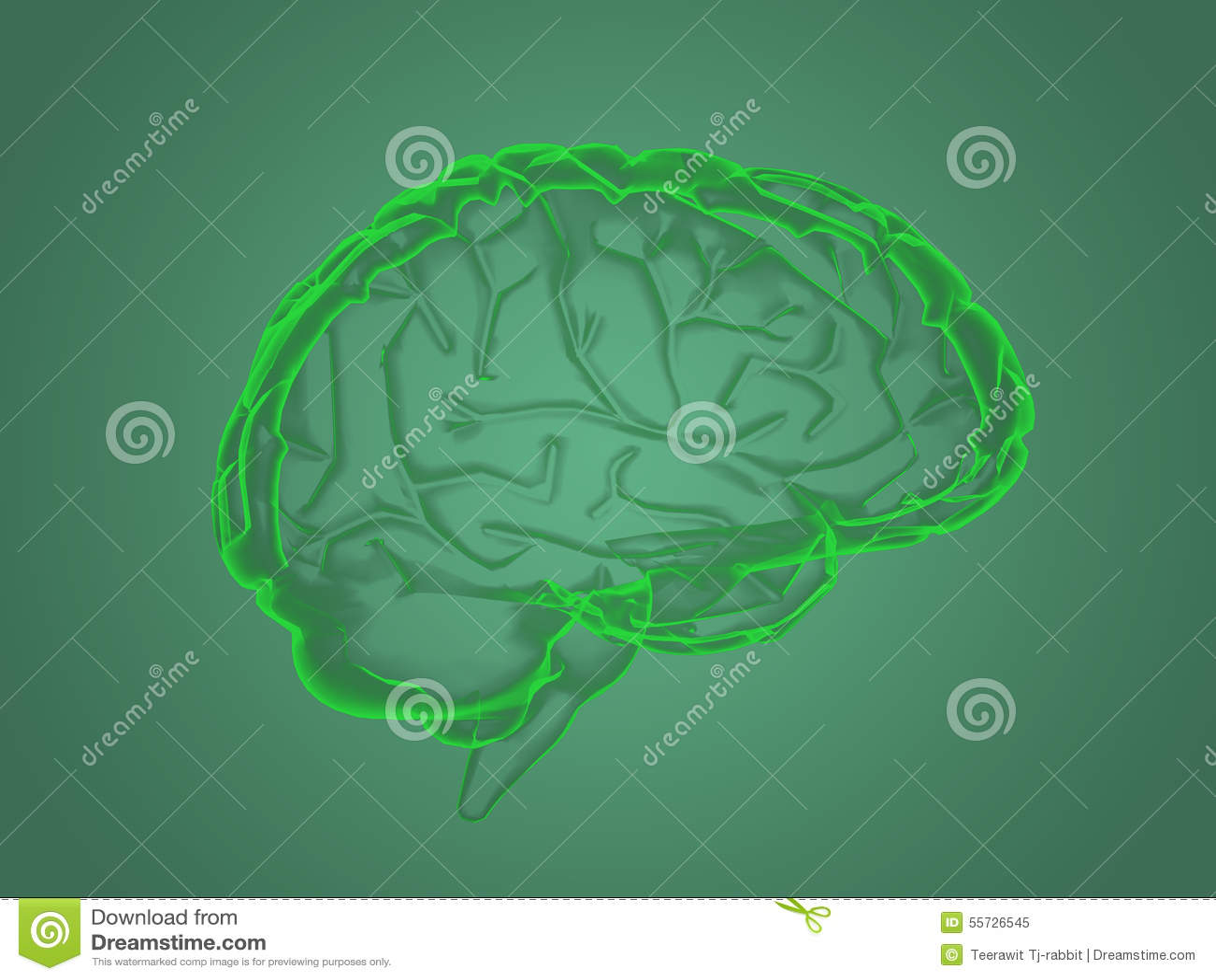 X-ray brain anatomy stock illustration. Image of male - 55726545