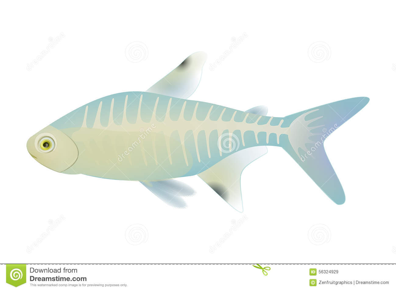 X ray fish vector antarctic animal x ray fish vector for X ray fish