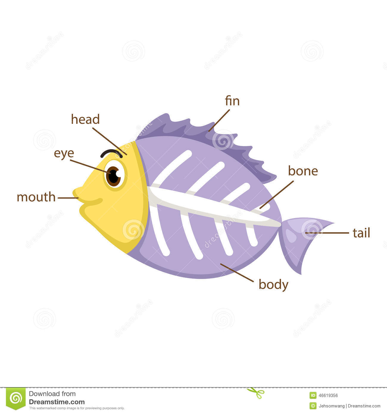 ray Fish Vocabulary Part Of Body Vector Stock Vector - Image ...