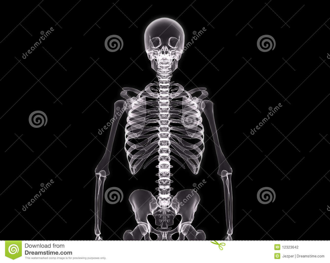 ray Of The Human Body Stock Photography - Image: 12323642