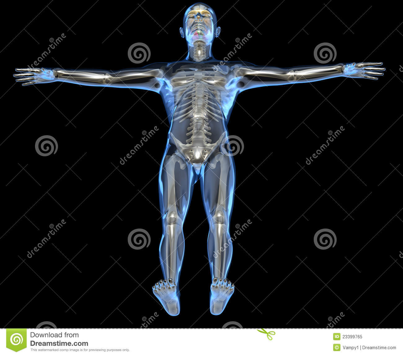 X Ray Of A Human Body Stock Illustration Illustration Of Course