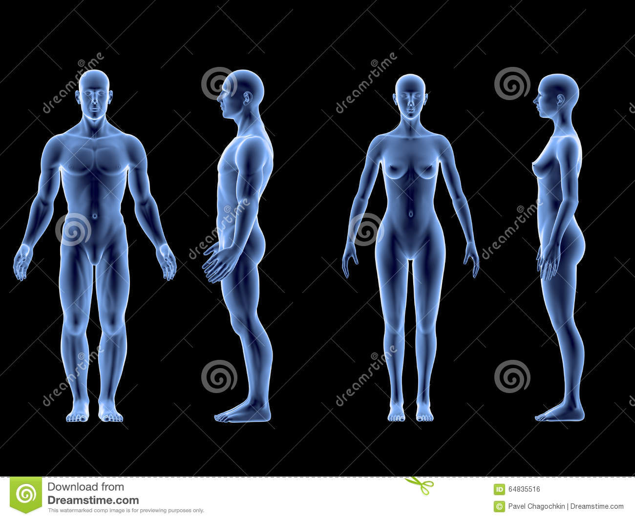 X Ray Human Male Female Body Anatomy Concept Isolate 3d Render