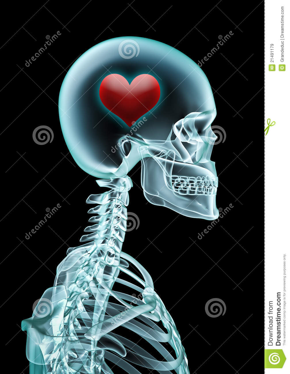 x ray love royalty free stock images image 21491179 Animated Dead Fish dead fish clipart free