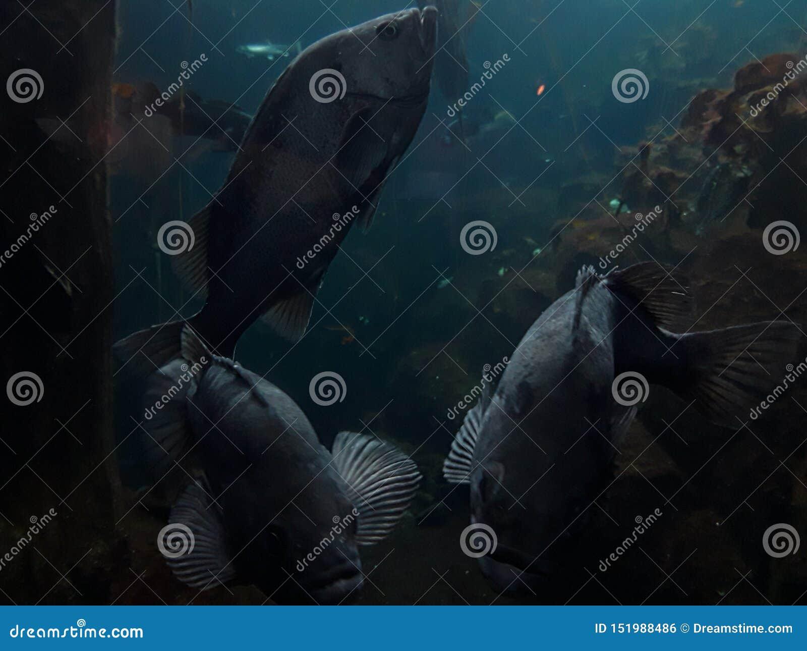 It& x27; s um mundo duvidoso dos peixes lá fora