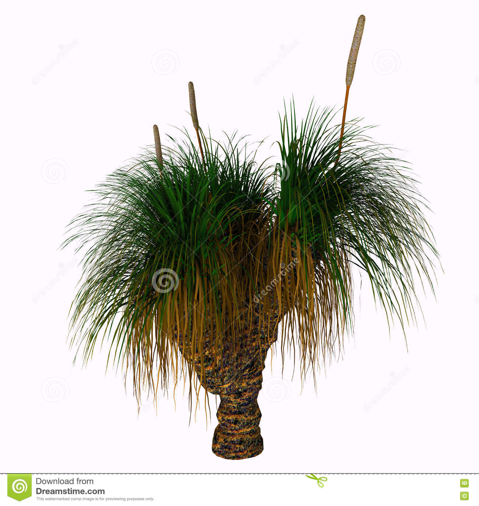 xanthorrhoea australis tree stock illustration