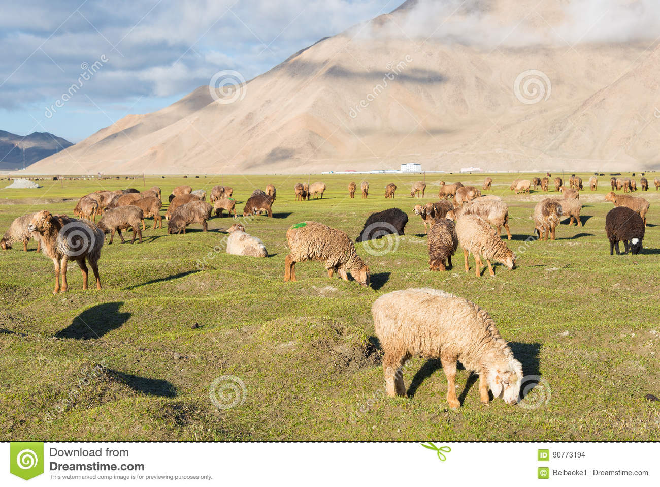 XINJIANG, CHINA - May 21 2015: Sheep at Karakul Lake. a famous l
