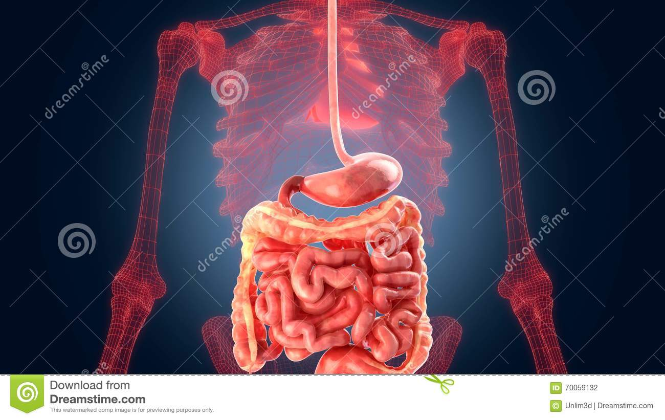 Xray scan internal organs stomach stock illustration download xray scan internal organs stomach stock illustration illustration of internal chest ccuart Choice Image