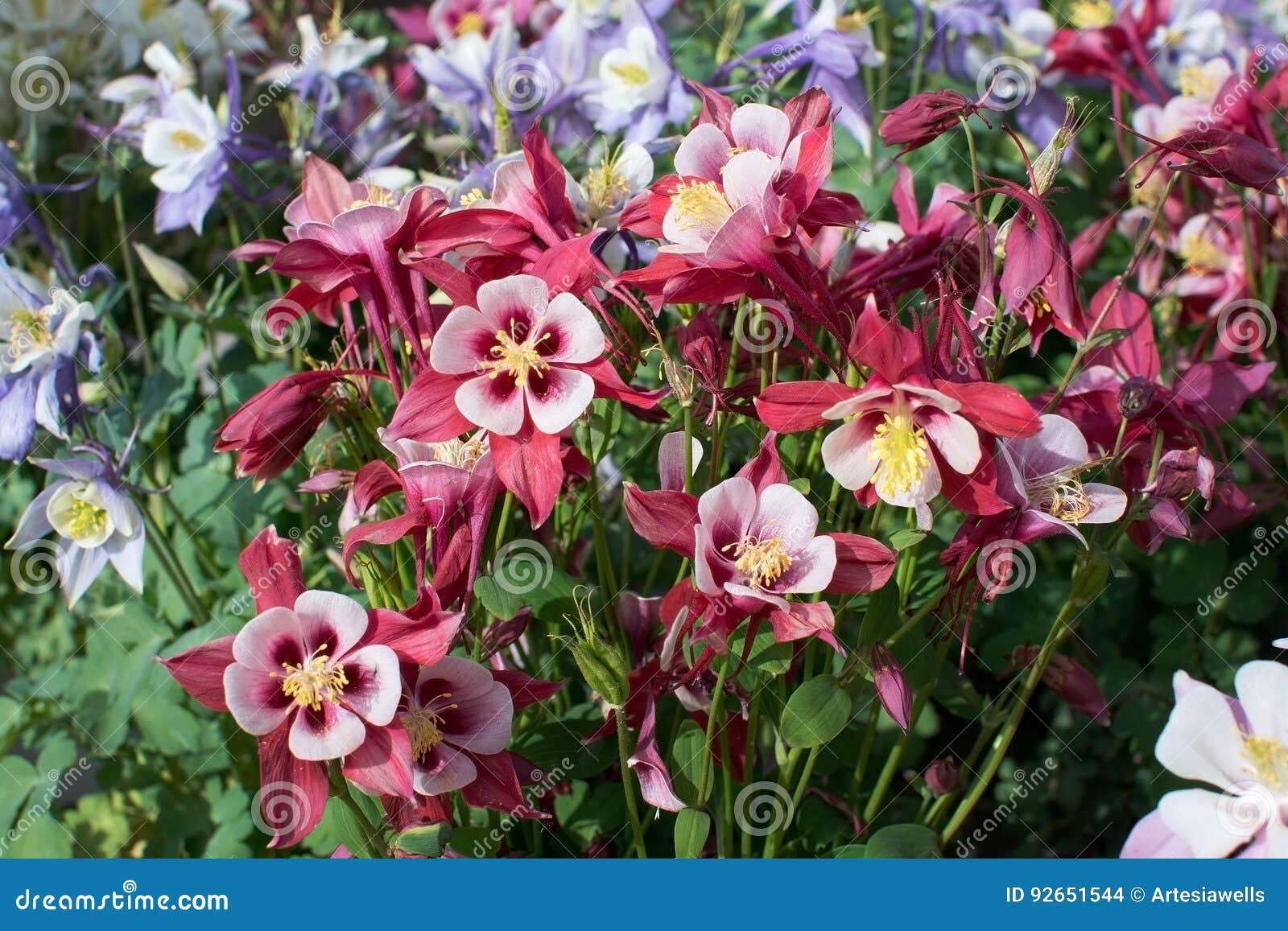 Xxx Flower