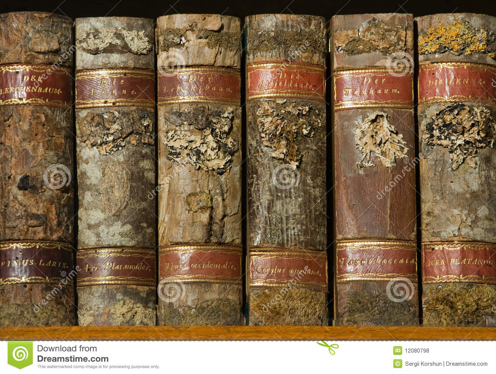 Xylotheca wooden books at the shelf stock photo - image: 120.