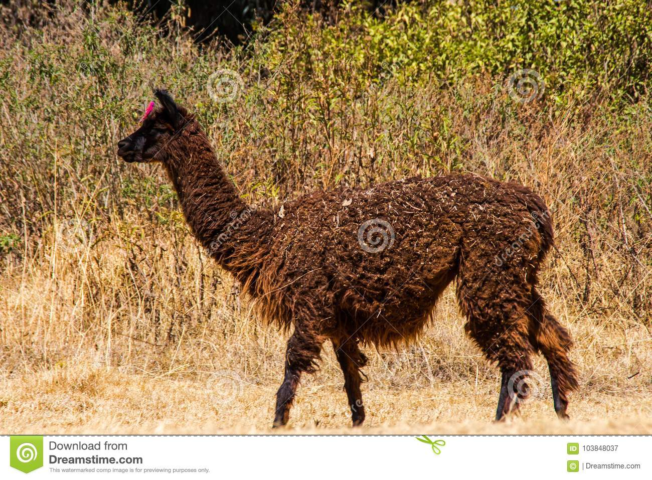 A yama in the field stock image. Image of machu, rock - 103848037
