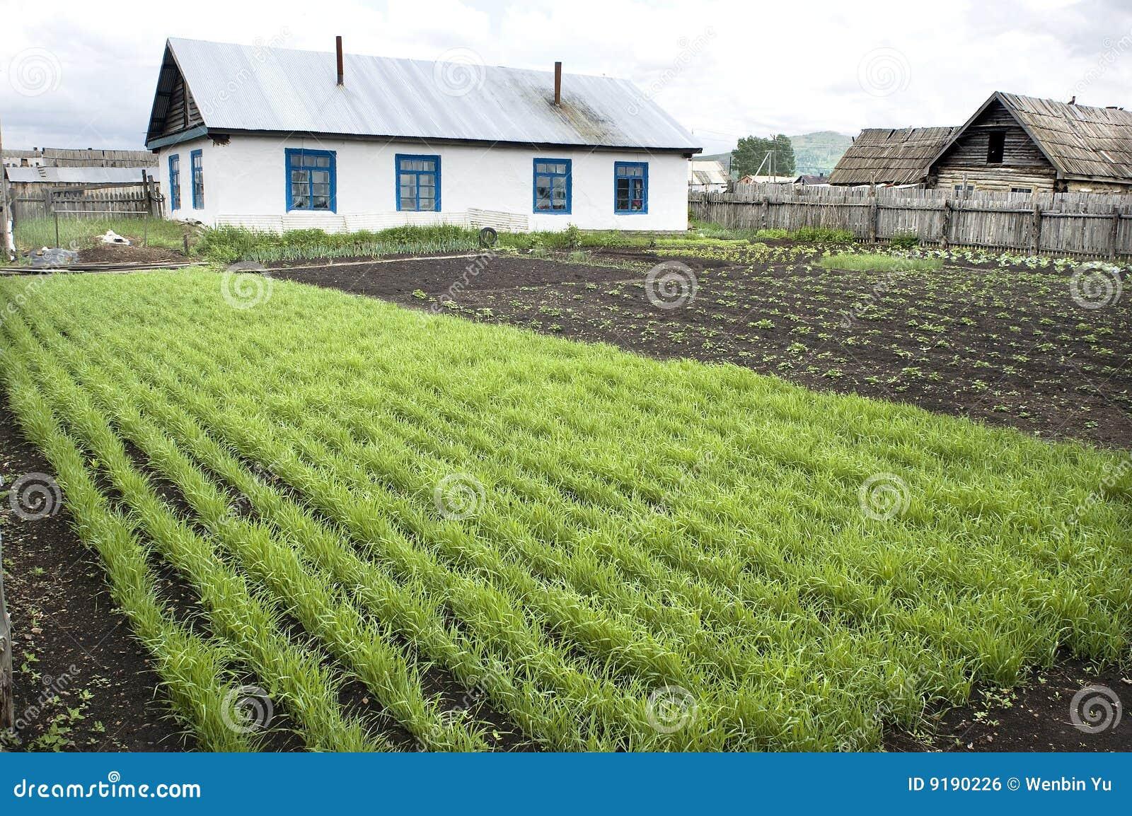 Yard, Haus