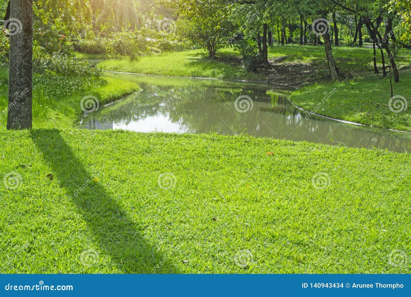 Yard vert frais d herbe de tapis, pelouse lisse dans un beau jardin et bon soin aménageant en parc, près d un long lac et des arb