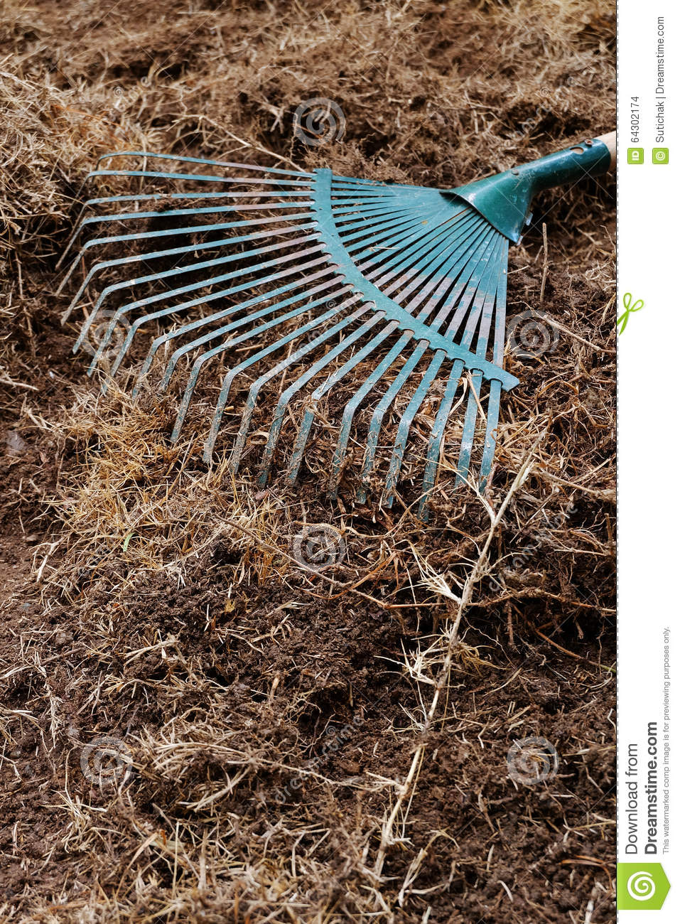 Yard work preparation soil in garden with rake stock photo image 64302174 - Gardening works in october winter preparations ...