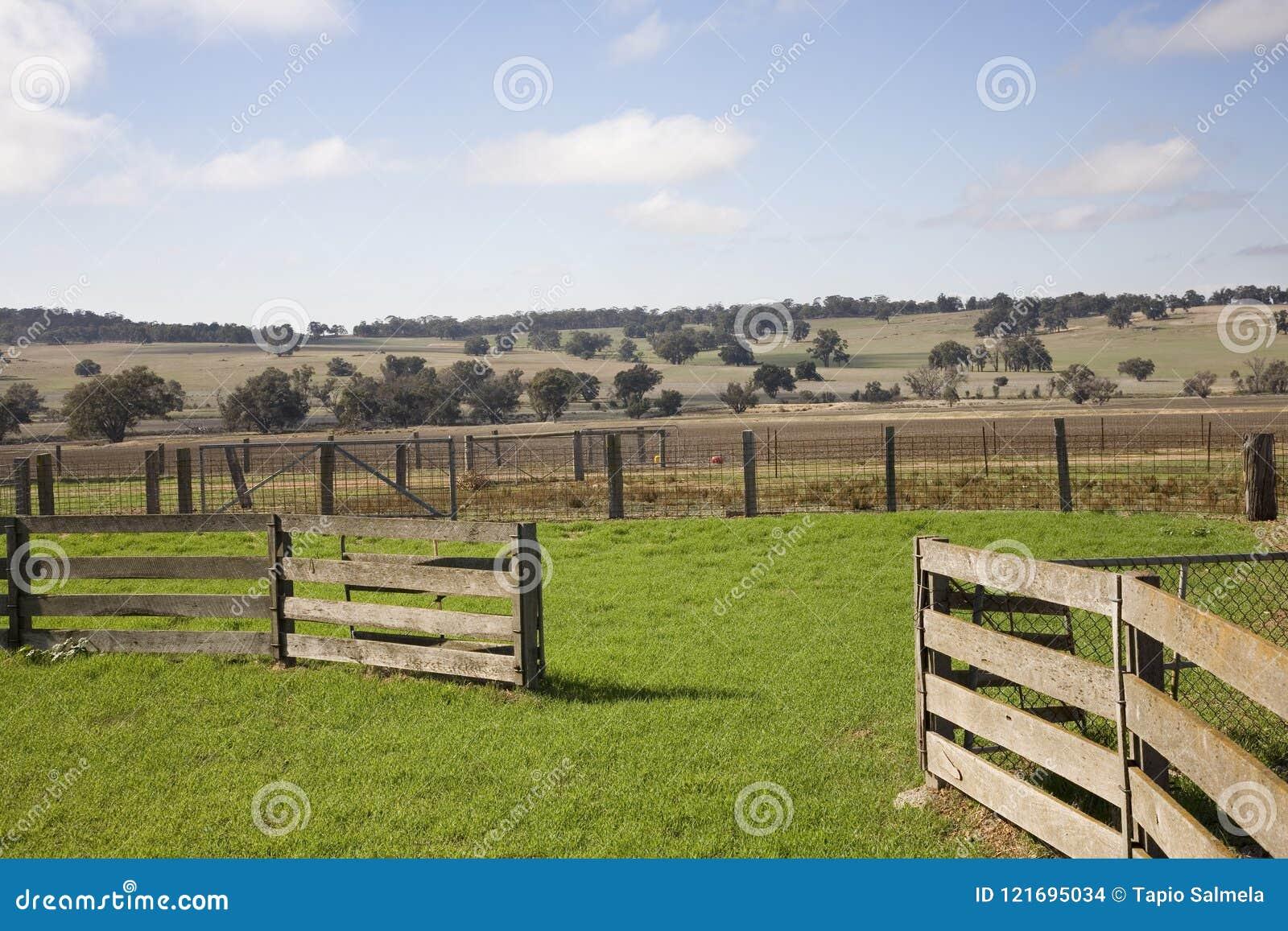 Yardas del ganado de Australia