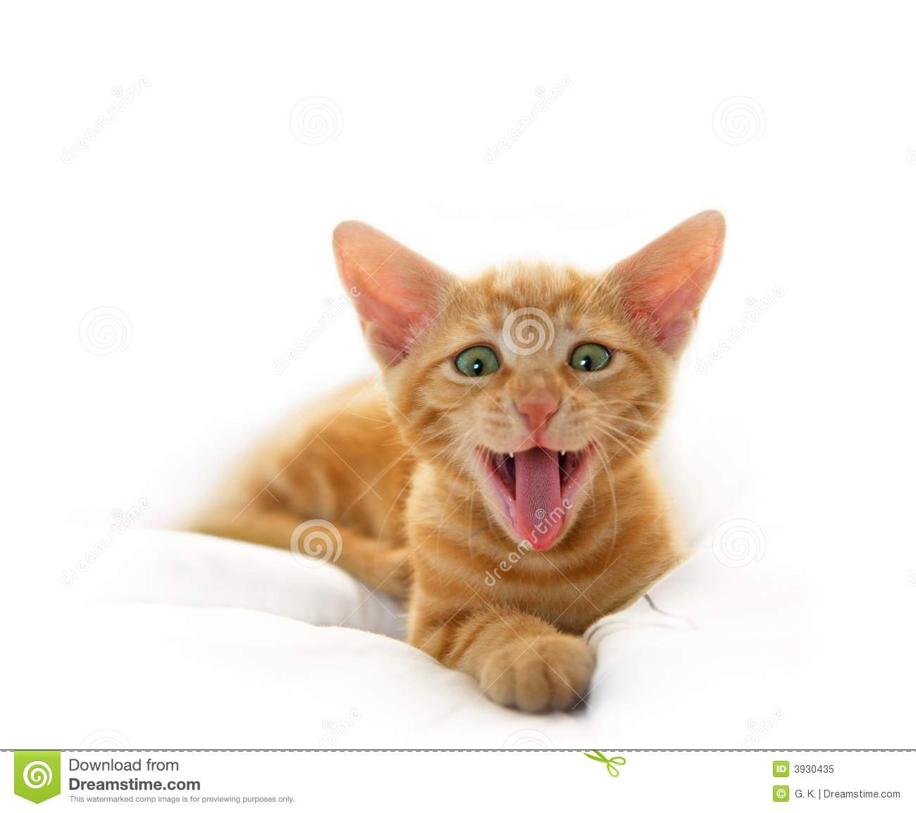 Yawning Cute Cat Royalty Free Stock Photo - Image: 3930435
