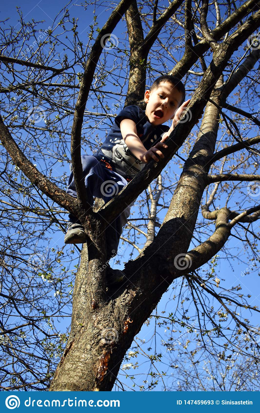 4 year old boy on the tree has problem to come down from tree