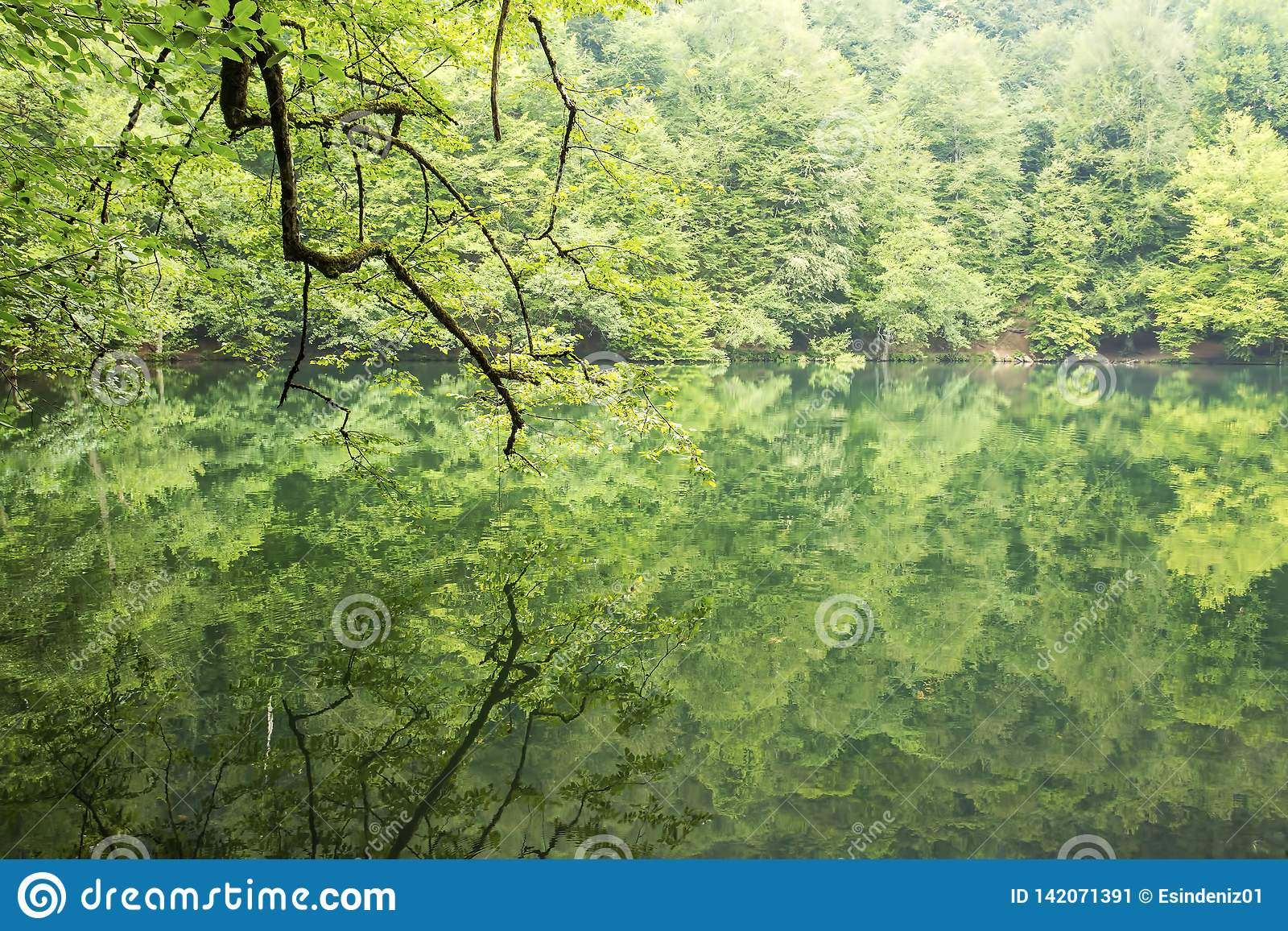 Yedigoller / Bolu / Turkey, summer season, forest landscape