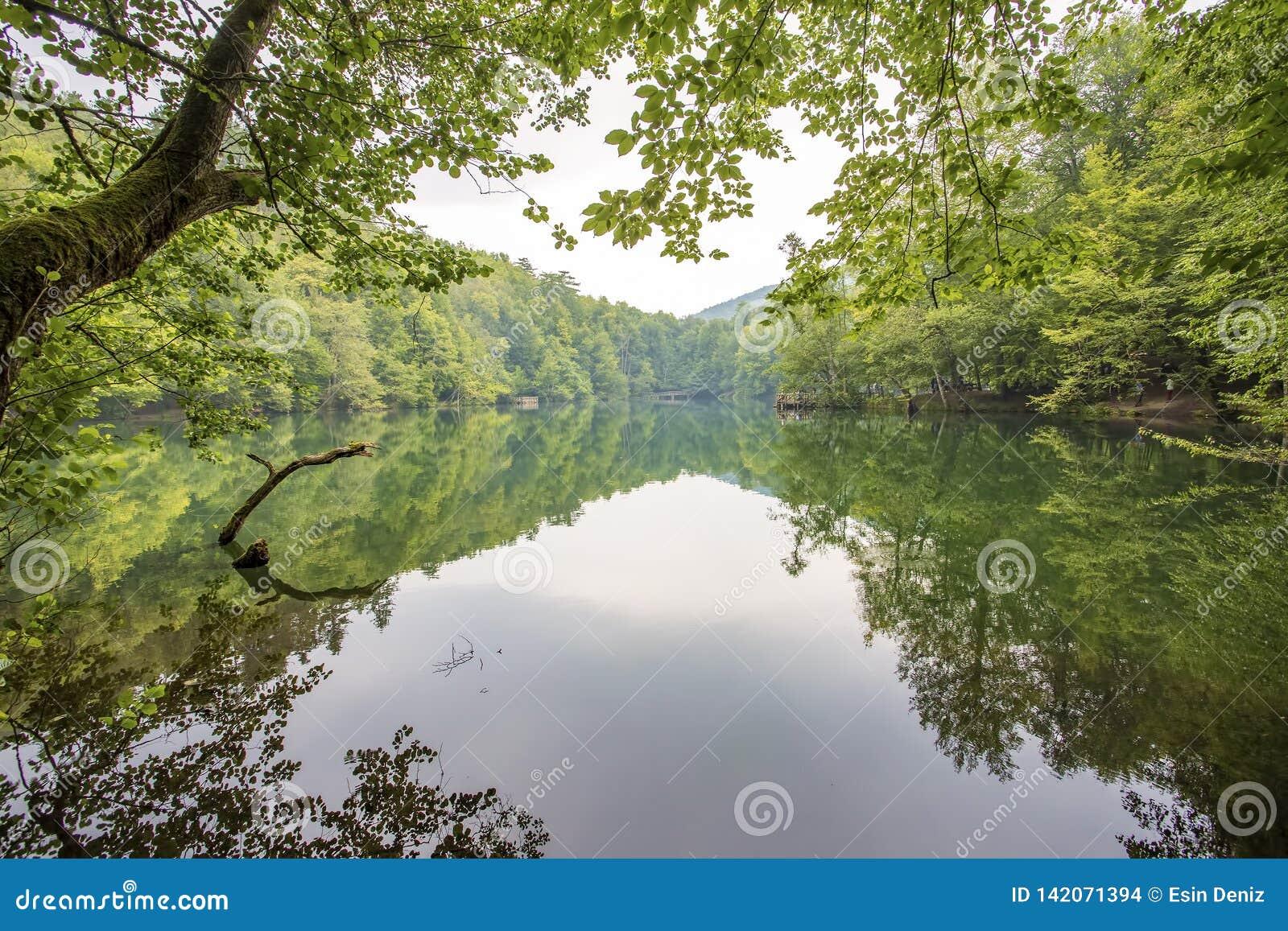 Yedigoller / Bolu / Turkey, summer season, forest landscape