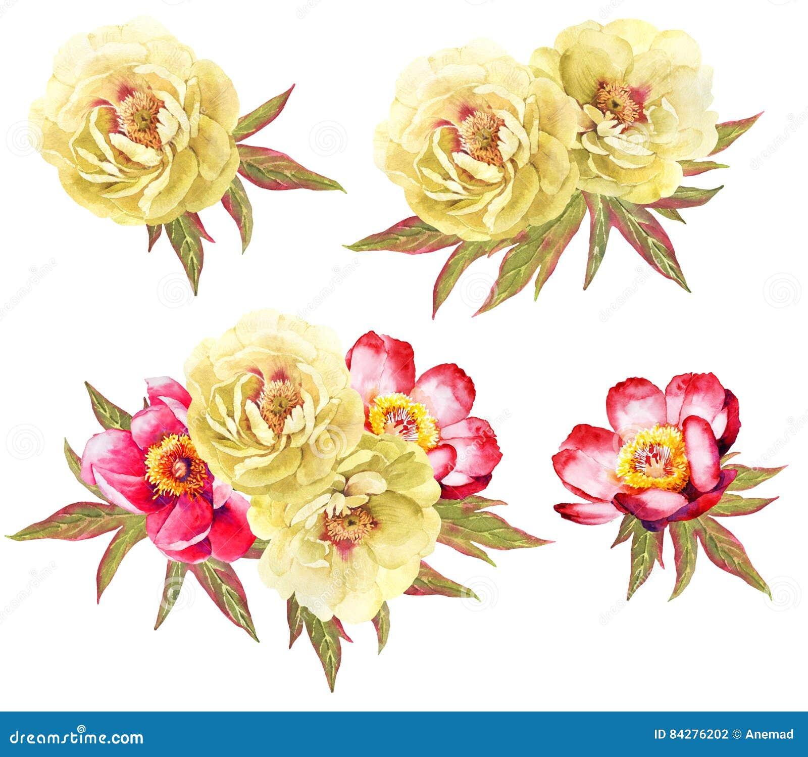 Yeellow i czerwone peonoes kwiatu akwareli ilustracje zbiera