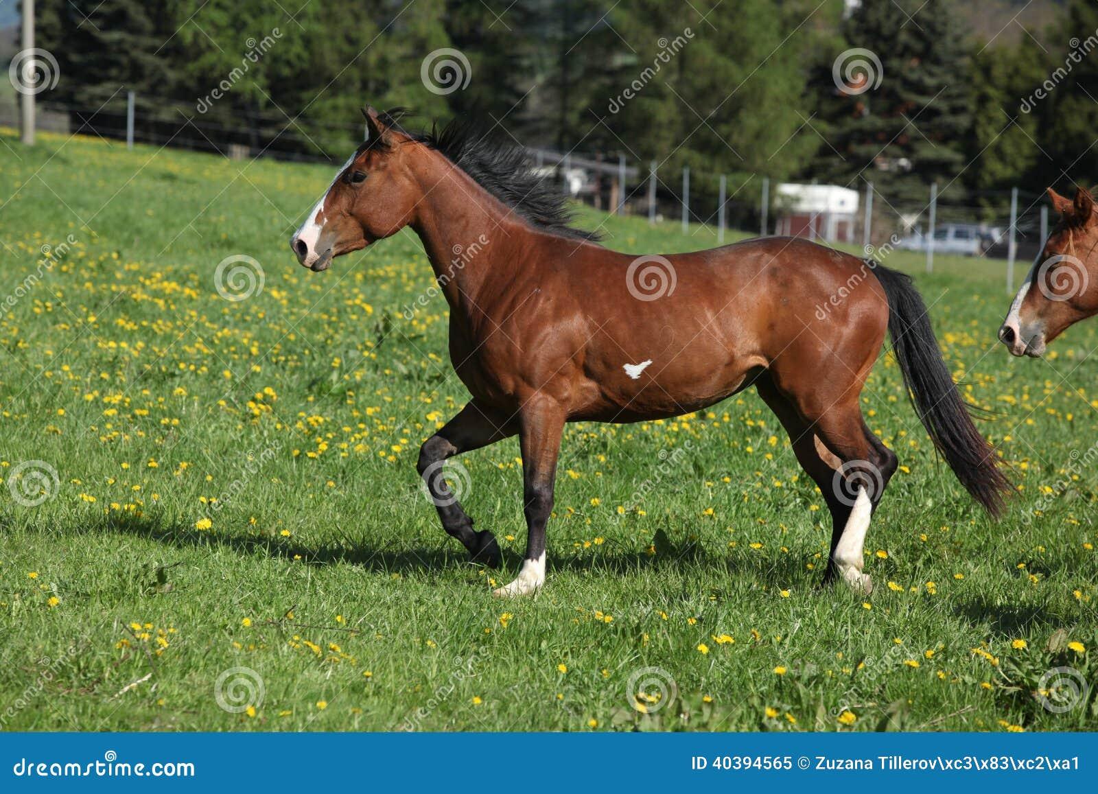 Yegua magnífica del caballo de la pintura que corre en pradera