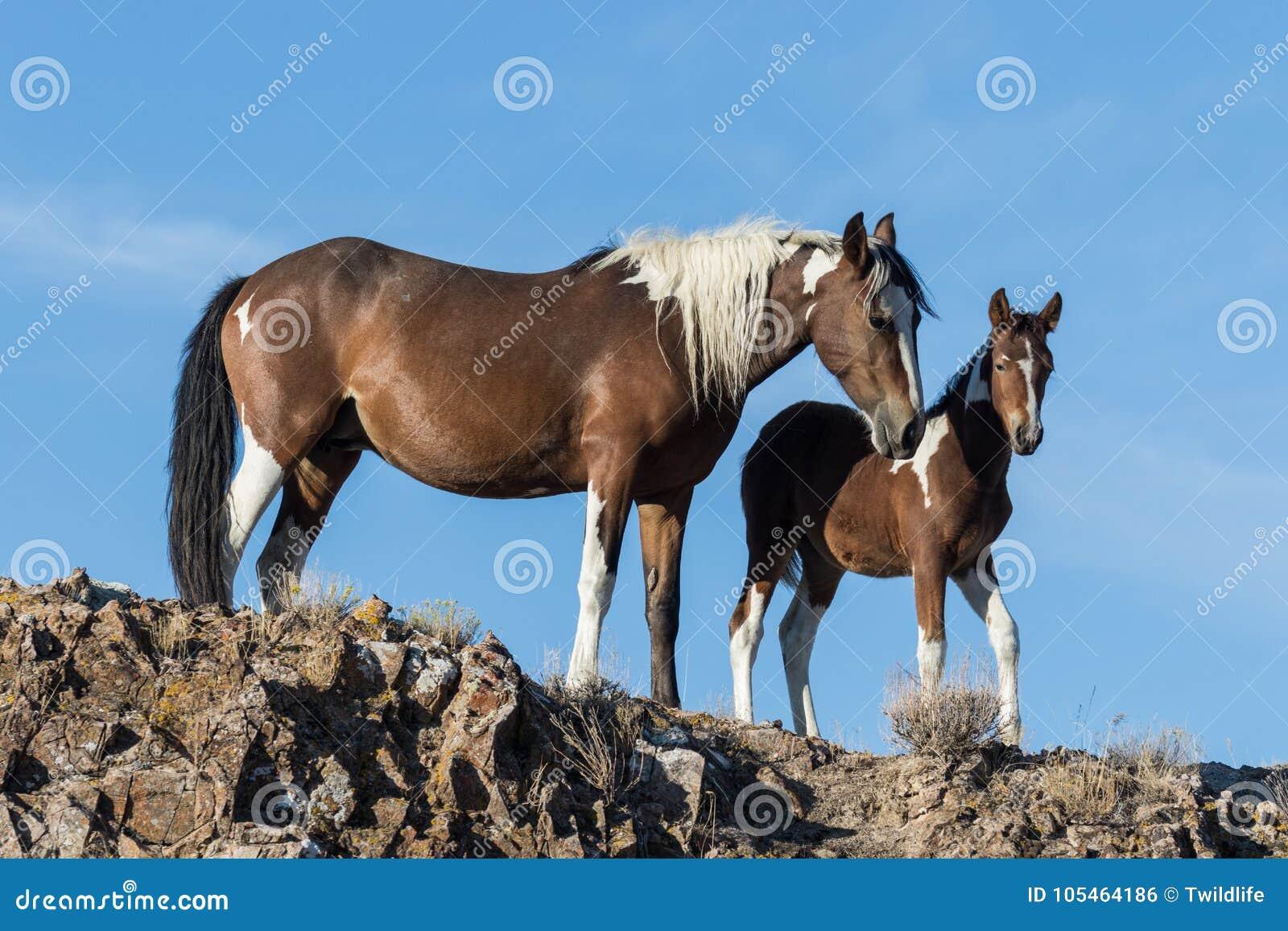 Yegua y potro del caballo salvaje