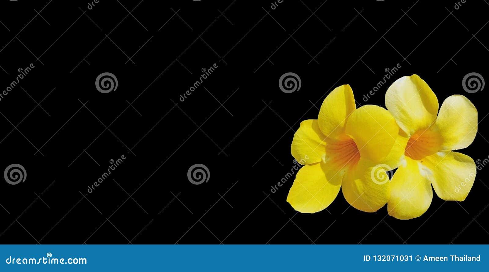 Yellowâ€-‹Blumen auf schwarzem Hintergrund