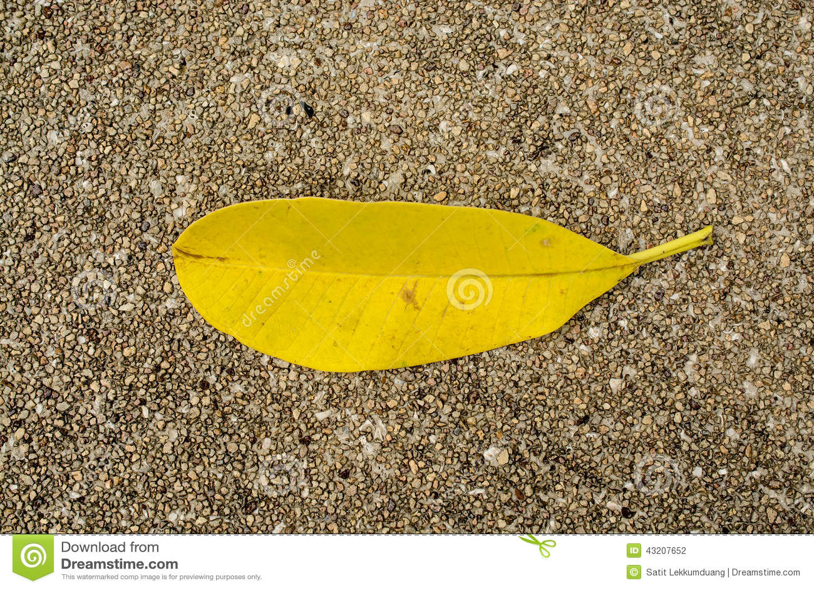Download Yellow arkivfoto. Bild av tropiskt, moget, makro, limefrukt - 43207652