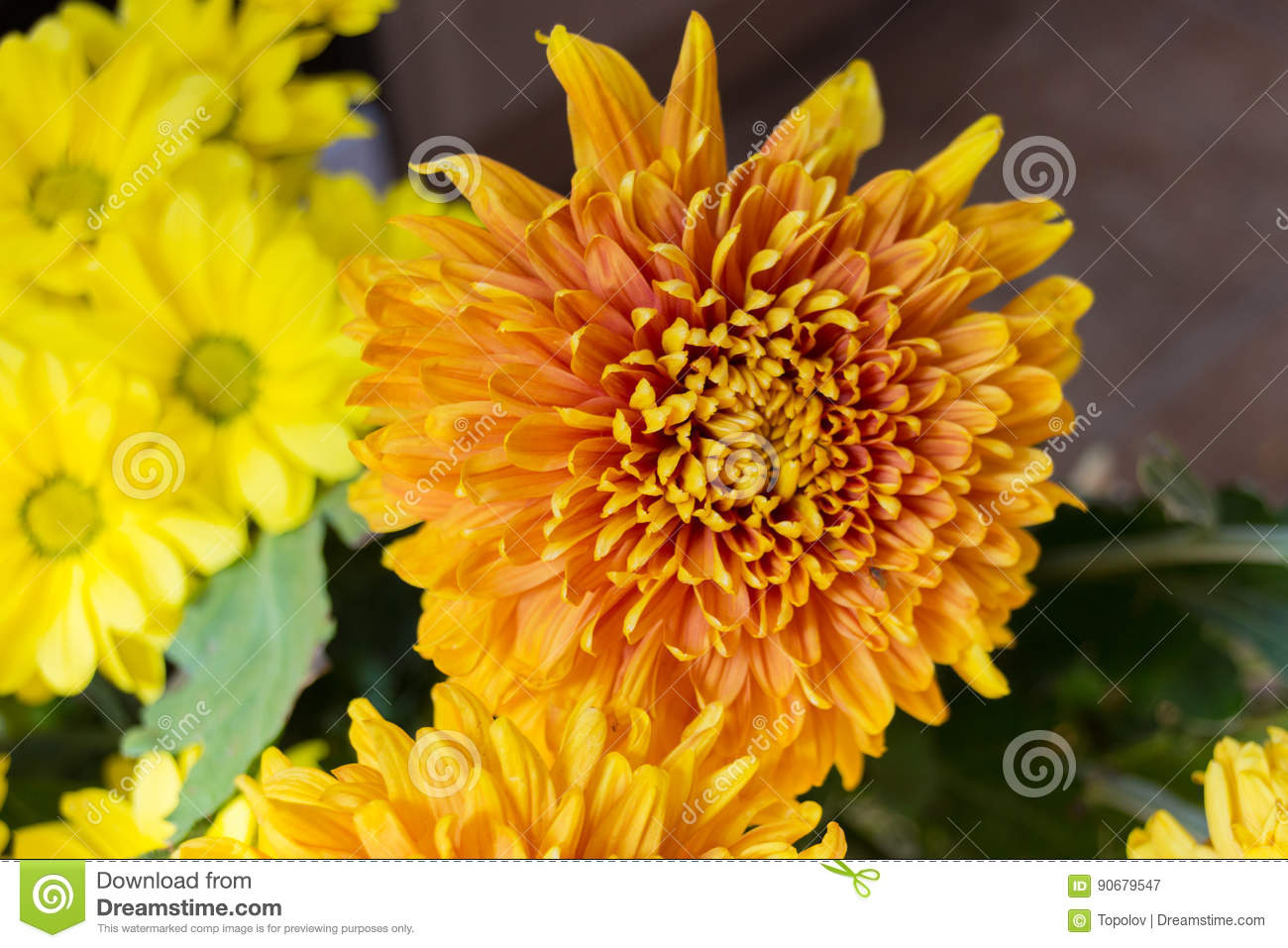 Yellow Aster Flowers Stock Image Image Of Beauty Wildlife 90679547