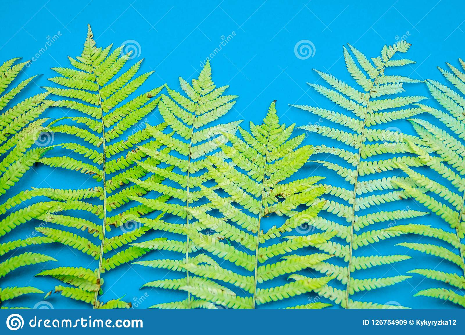 Yellow autumn leaf fern on a blue background. Warm cozy concept Royalty Free Stock Images