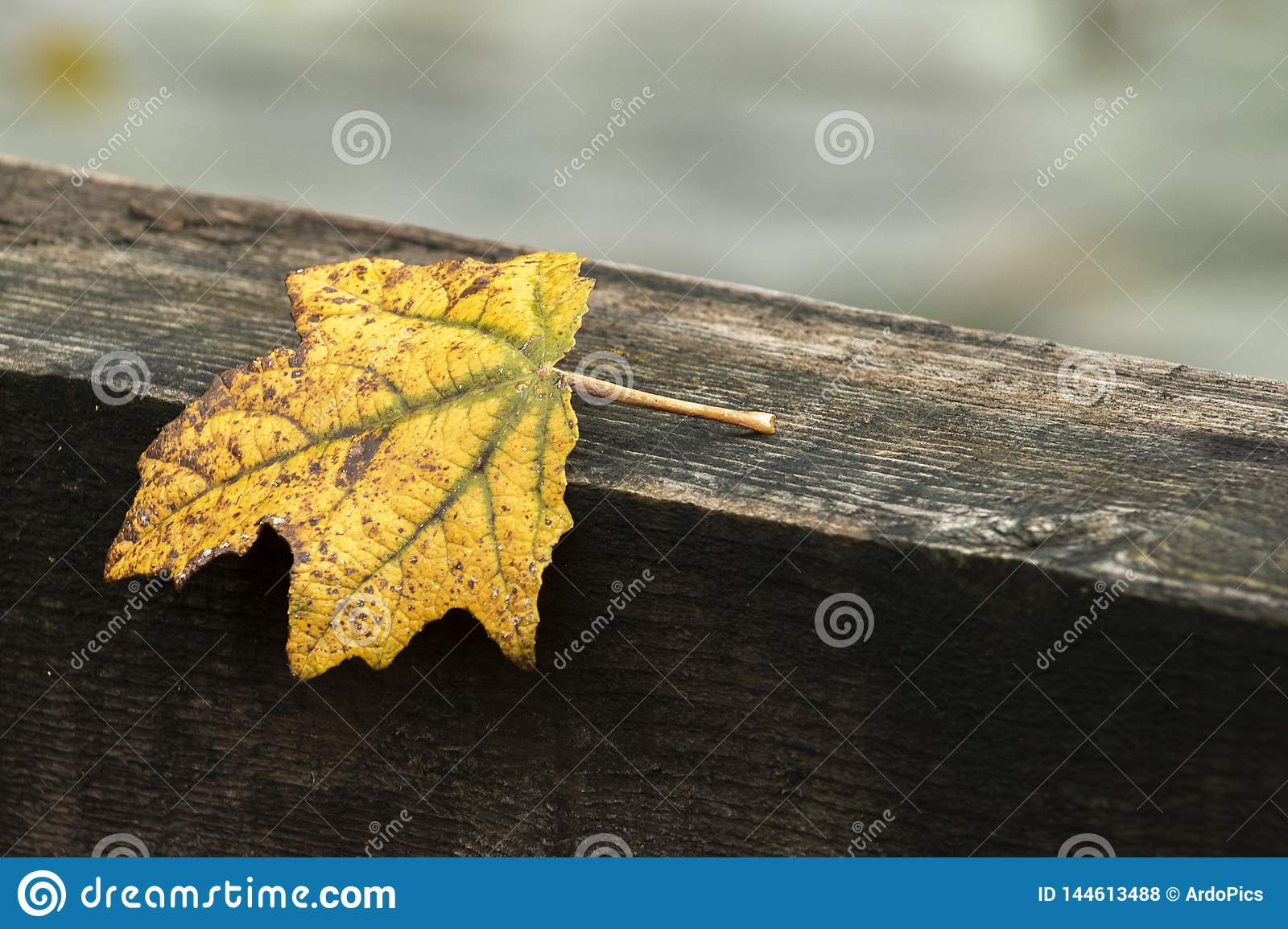 Autumn and yellow leaf