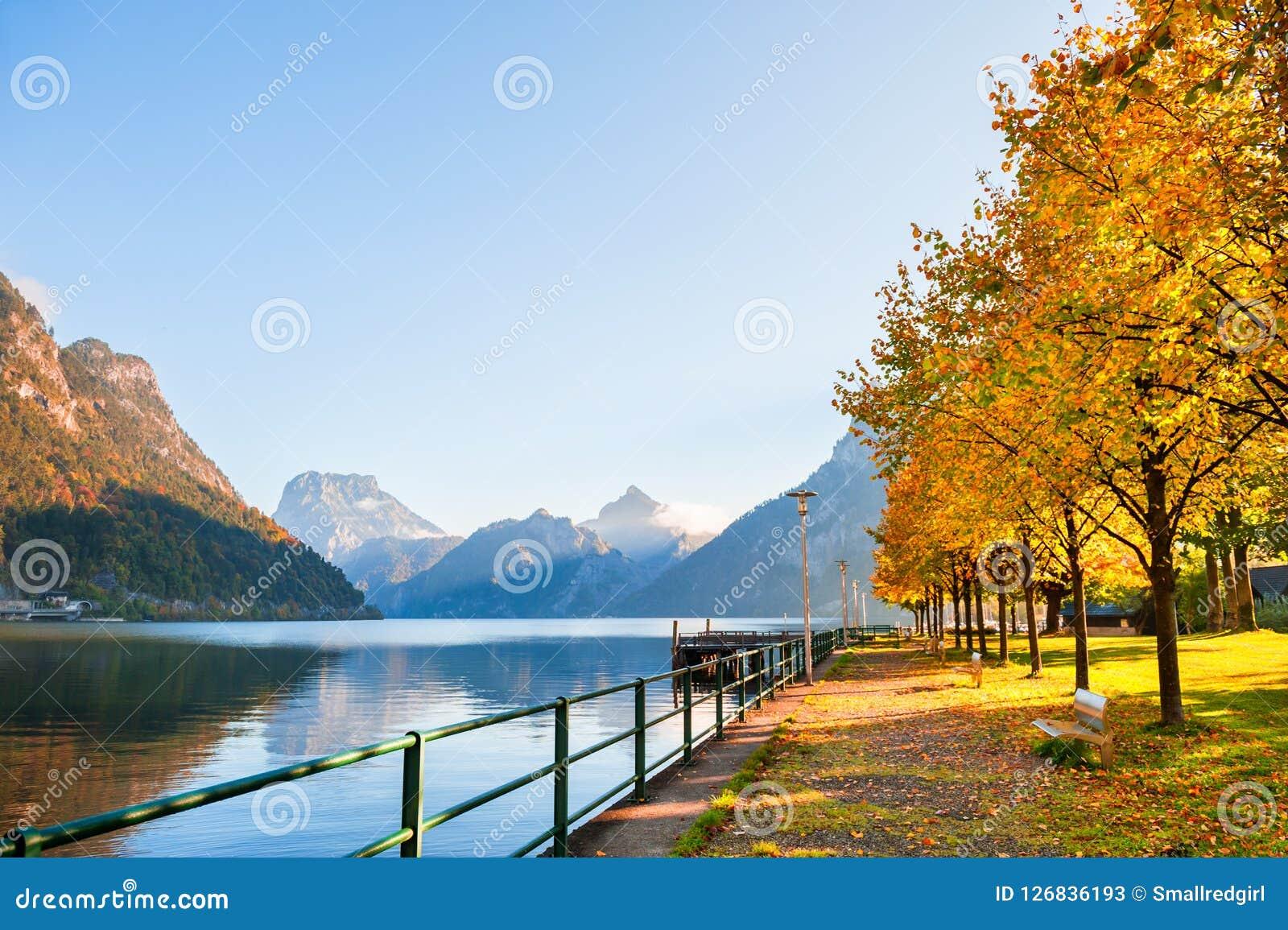 Yellow Autumn Trees On The Shore Of Lake In Austria Stock Image