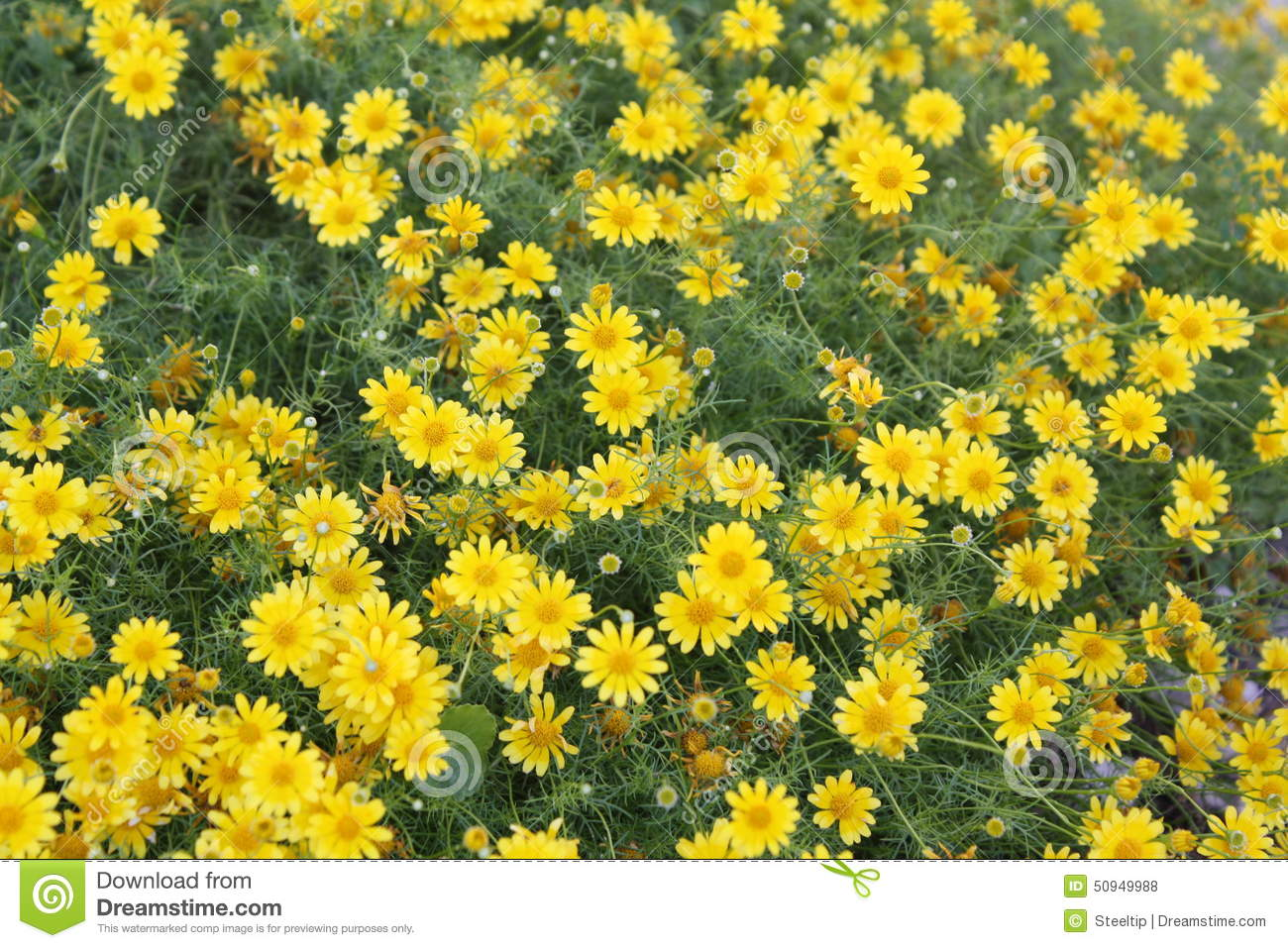 Yellow background wildflowers stock photo image of green yellow background wildflowers stock photo image of green groundcover 50949988 mightylinksfo